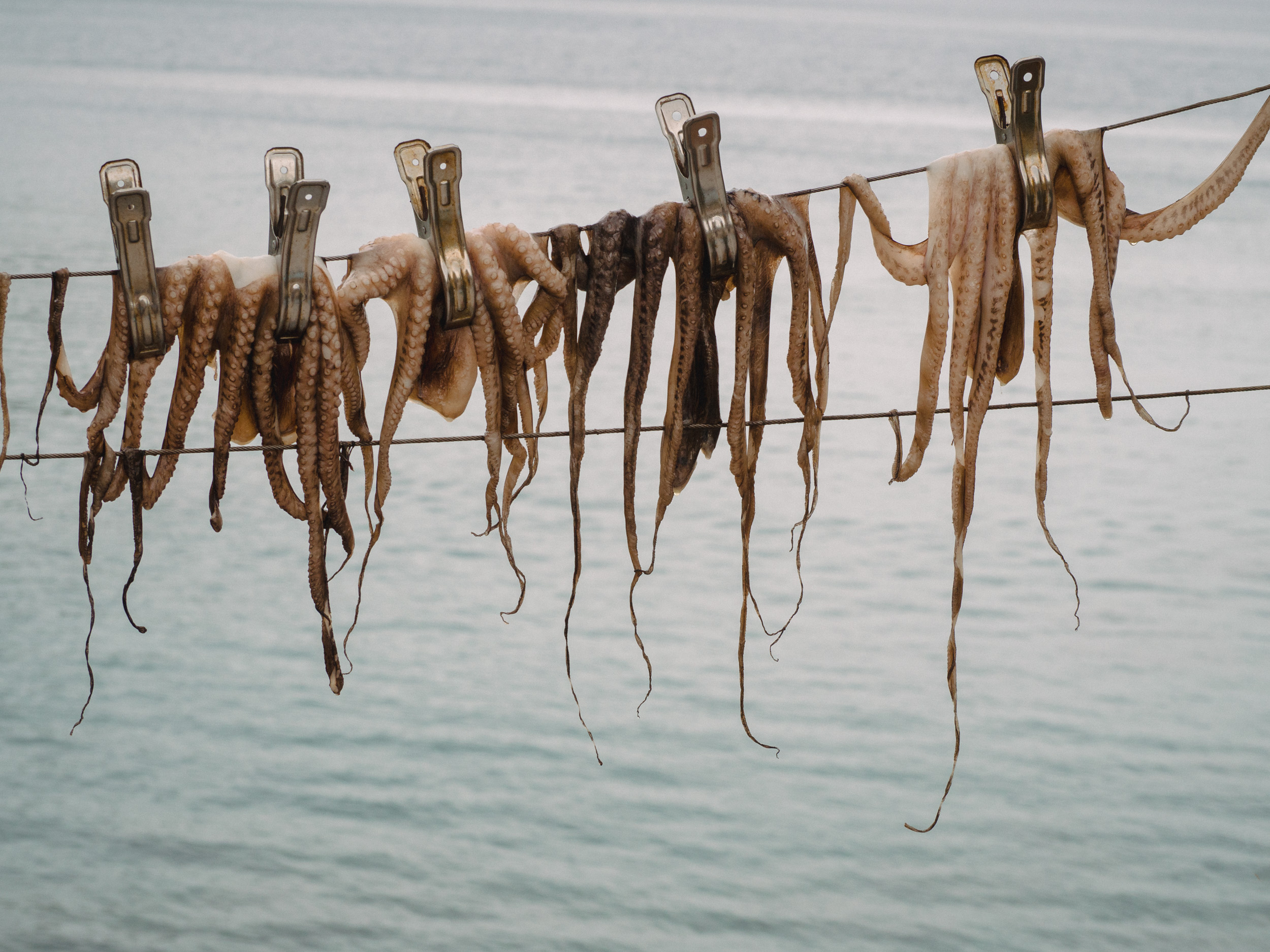 Octopus drying on the line