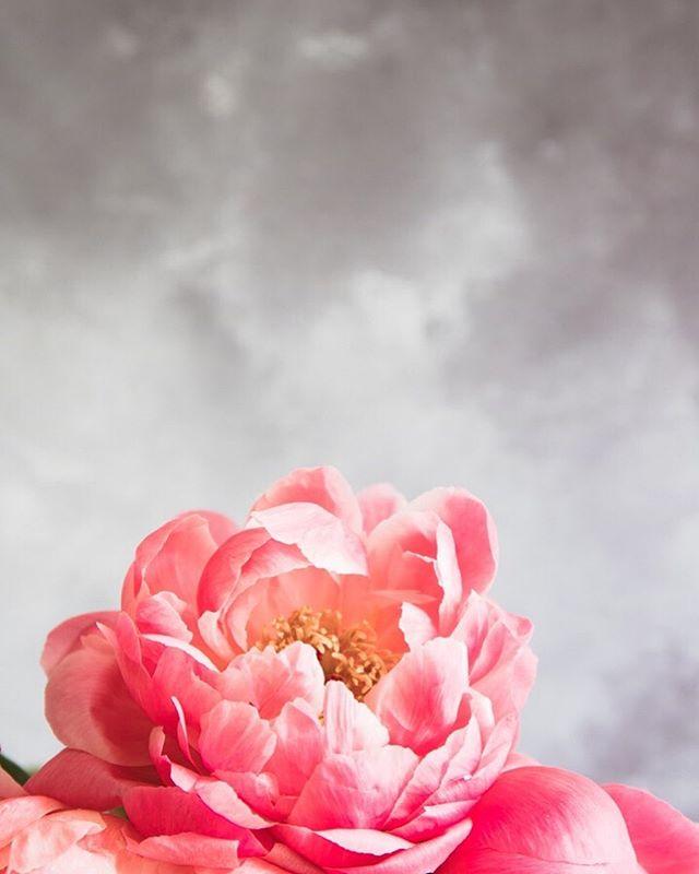 Happy FriYay dear friends ! 🌸🌸🌸 Have a wonderful weekend 🌸🌸 ⠀⠀⠀⠀⠀⠀⠀⠀⠀ #myfloraldays#floralstories#floralperfection#stilllife_perfection#filthyflora#inspiredbypetals#loveliest4#astillmoment#forprettysake#seeingthepretty#ofquietmoments#thisjoyfulmoment#alittlebeautyeveryday#byarrangement#simpleandstill#Simplicityinstilllife#styleonstillness#floral_faffery#inspiredbypetals#seeing_the_ordinary#simplystyledflowers#justbefloral#floralmoments#authenticflorals#foreverfaffing#mypastelcharm#itsastill_life#botanicalpickmeup#realflowersoftheseason#photoboardshq