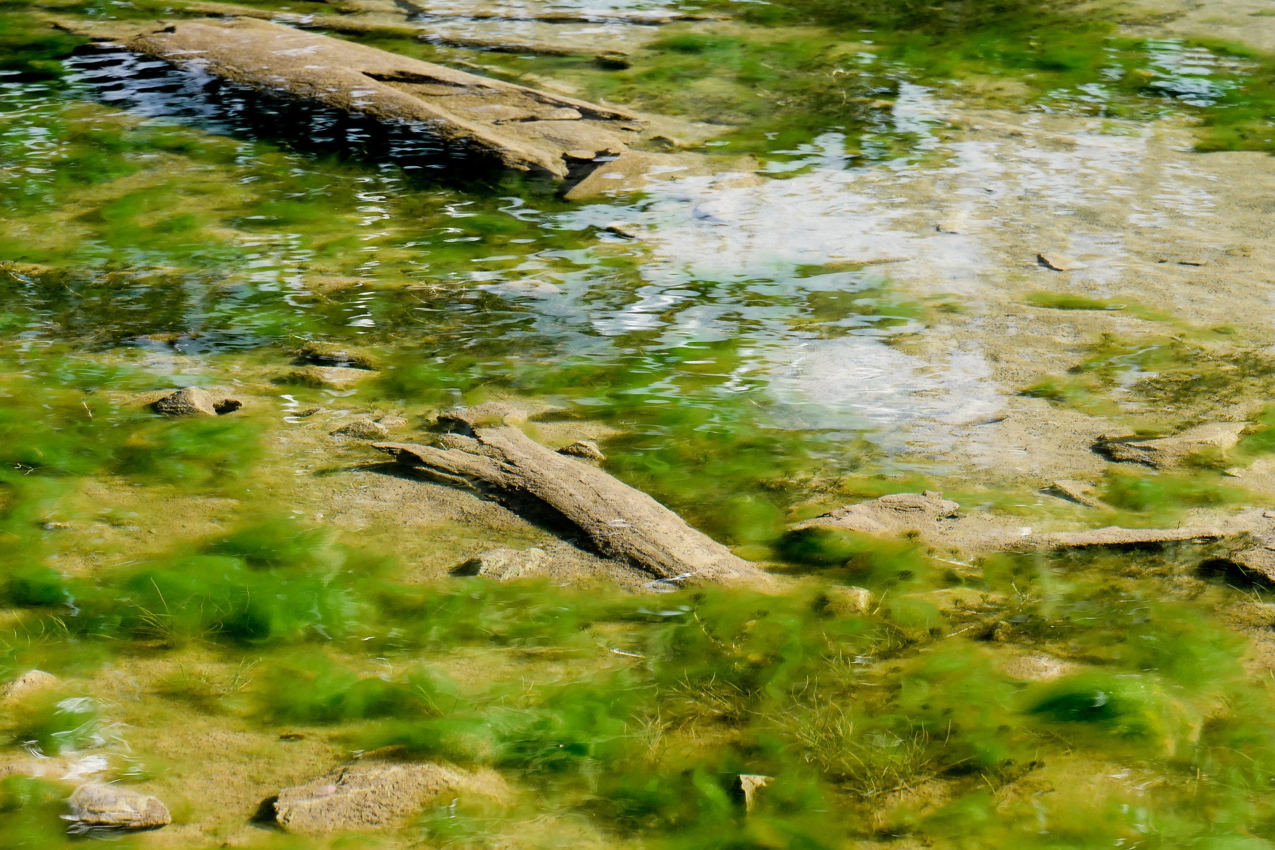 Submerged Limb #2