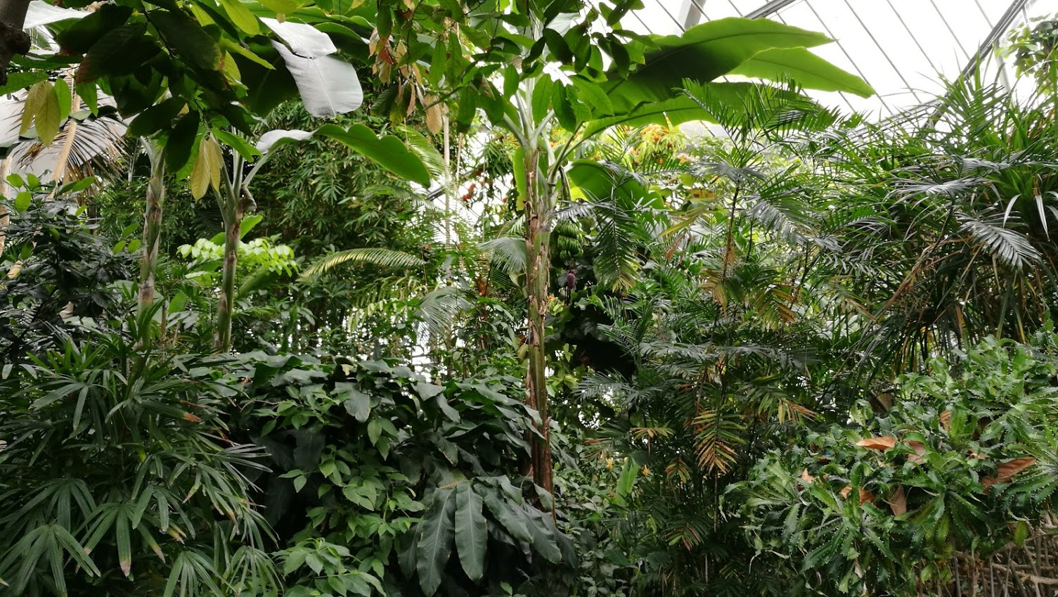 junglea.jpg
