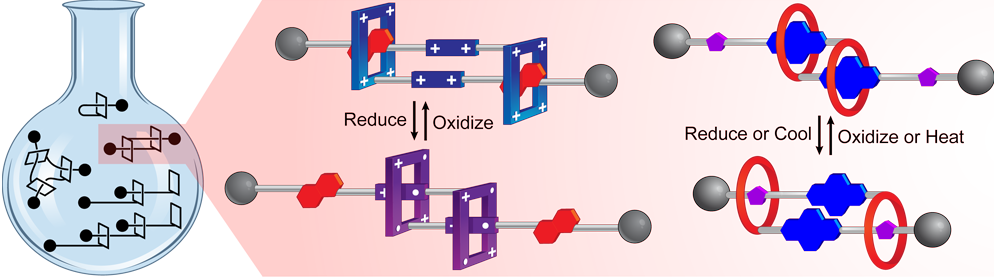 20 Rotaxane Based Molecular Muscles.png