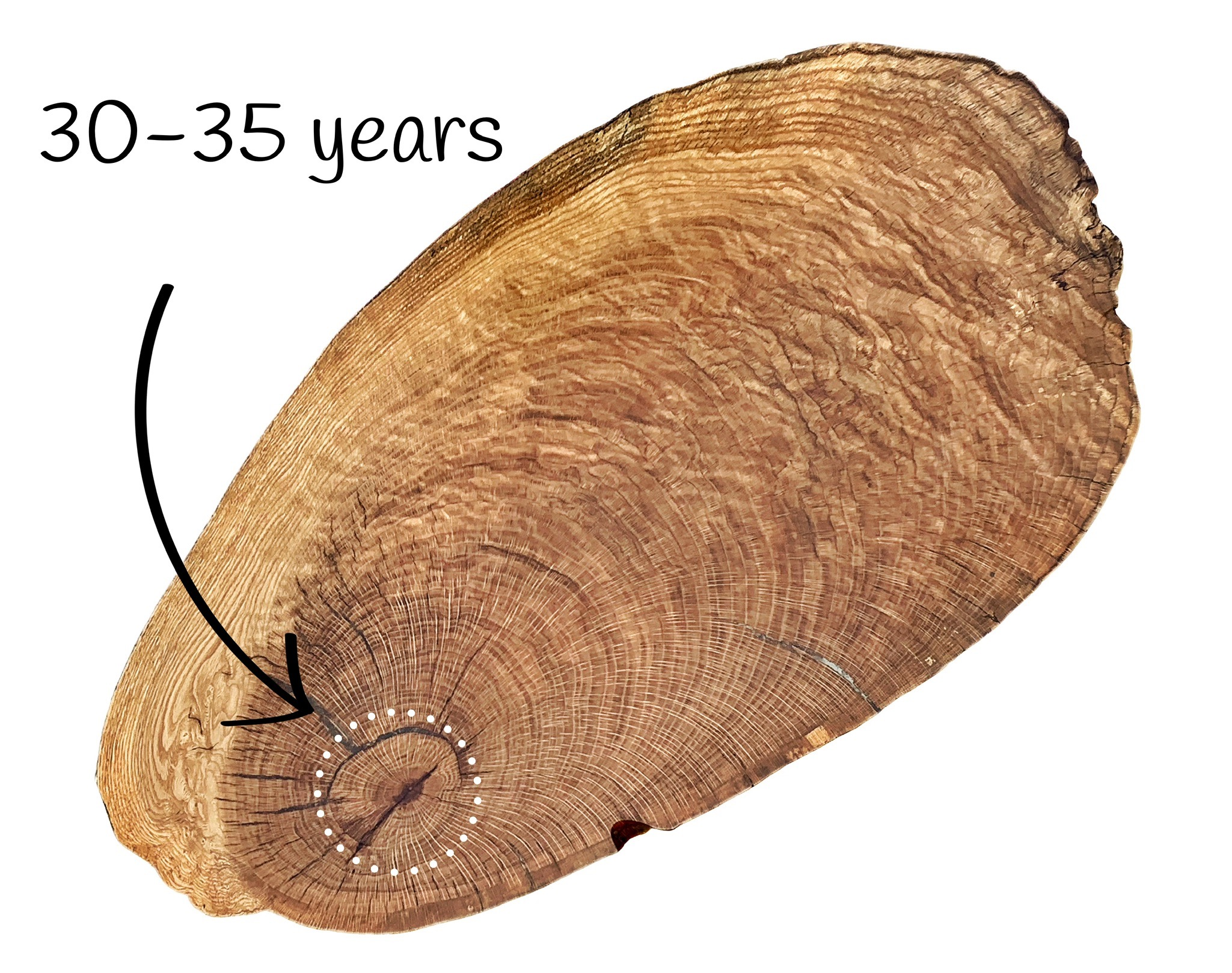 Figure 1 : area within the circle represents 30-35 years of growth