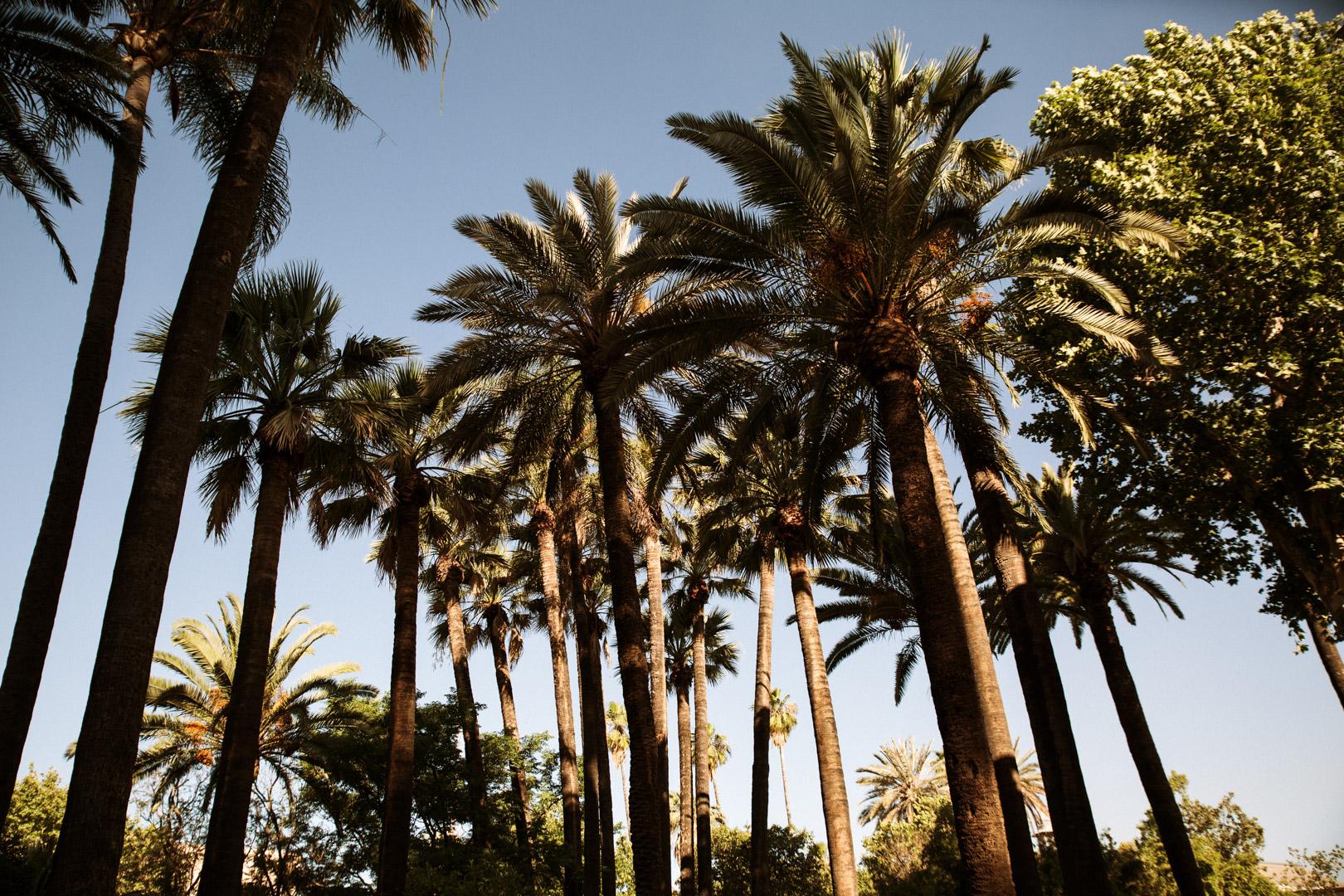 Boda en Villa Luisa, Sevilla (1).jpg
