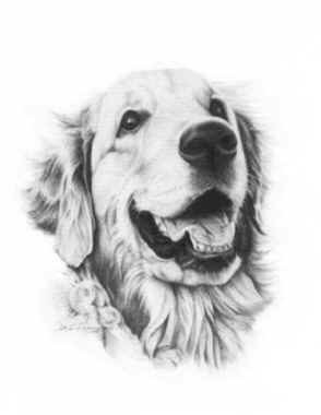 """Chessie""  Sunmark's Cheshire Tide Pencil on paper; 11 x 14"" Collection of the artist ©1989 Karen Killian"