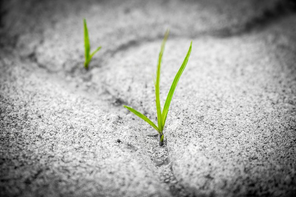 grass-1913167_960_720.jpg