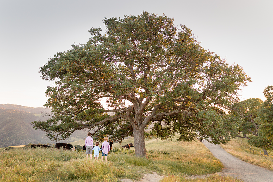 krhoun-family-twig-and-oak-photography-10054.png
