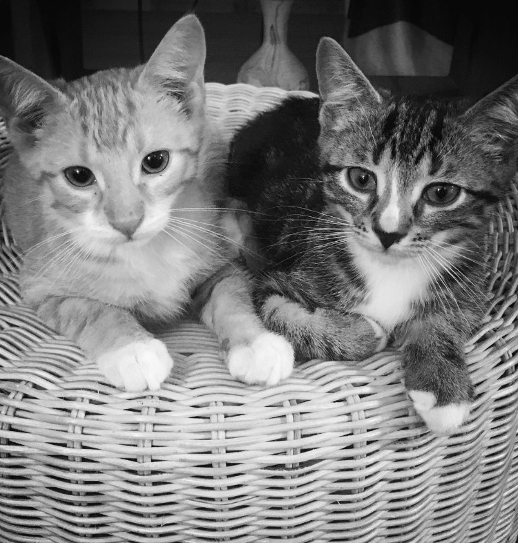 Huck and Finn