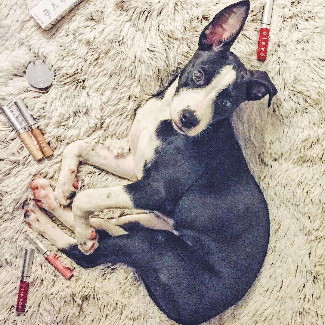Counterclockwise {Bombshell Beauty Balm, Faux Filter, Fixe, Lip POP (L to R Nashville, Aspen, New York City)} with dog_LR copy.jpg