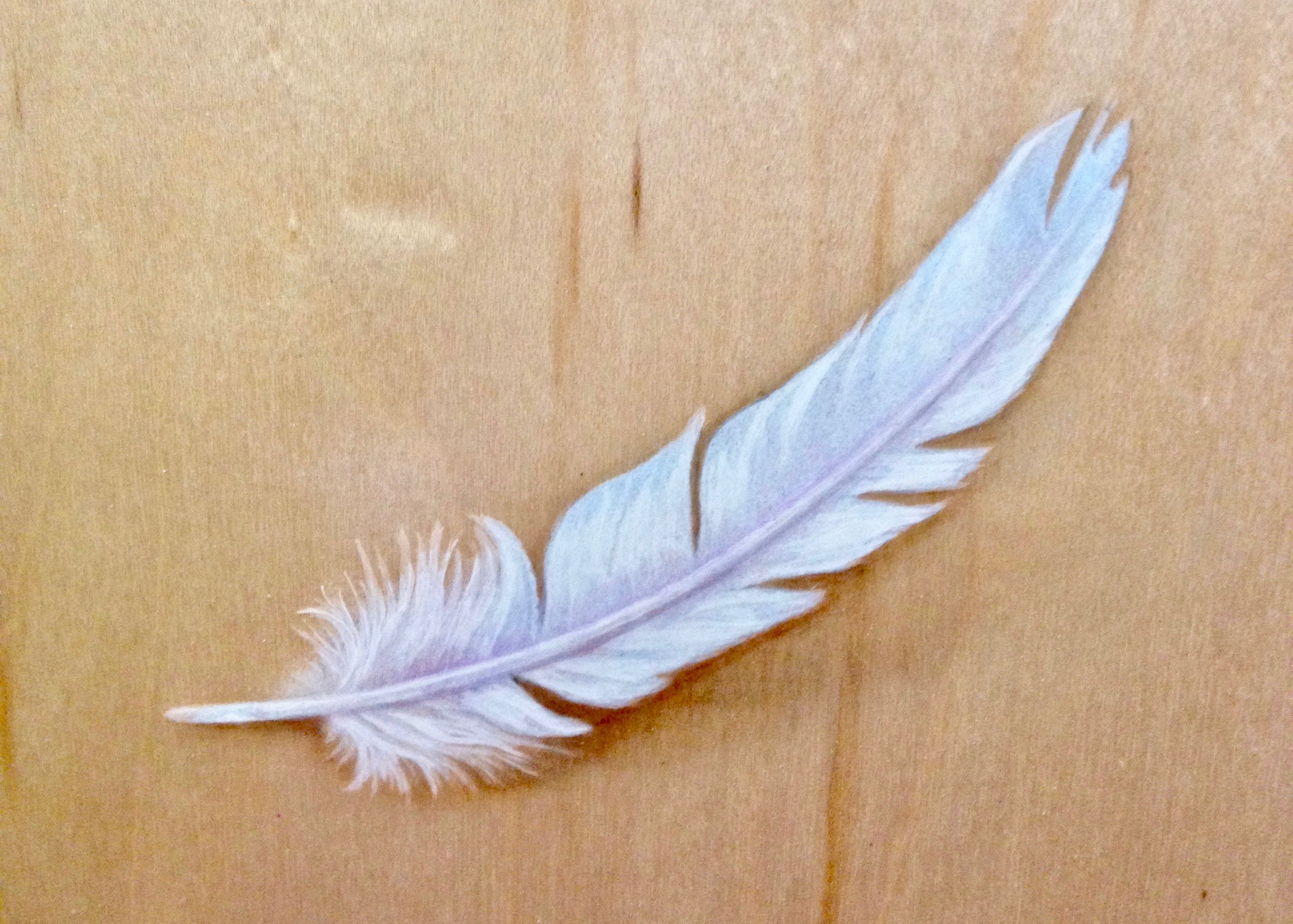 A feather, hand painted by Garen Rees, slips lightly down a soundboard.