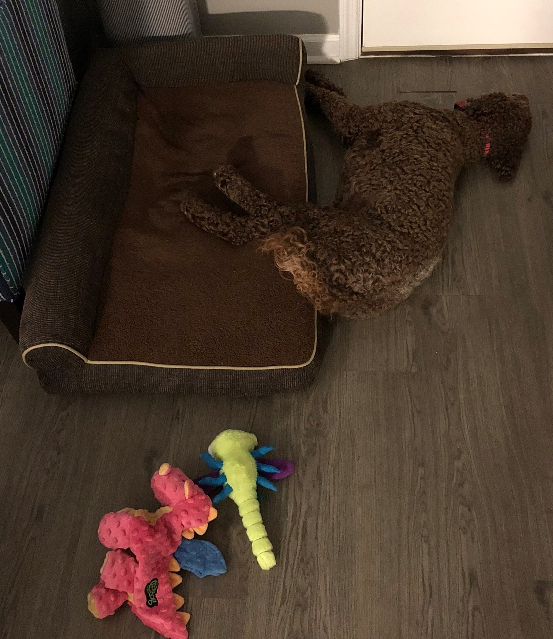 I almost made it to my bed after a long day of playing with my new toys.