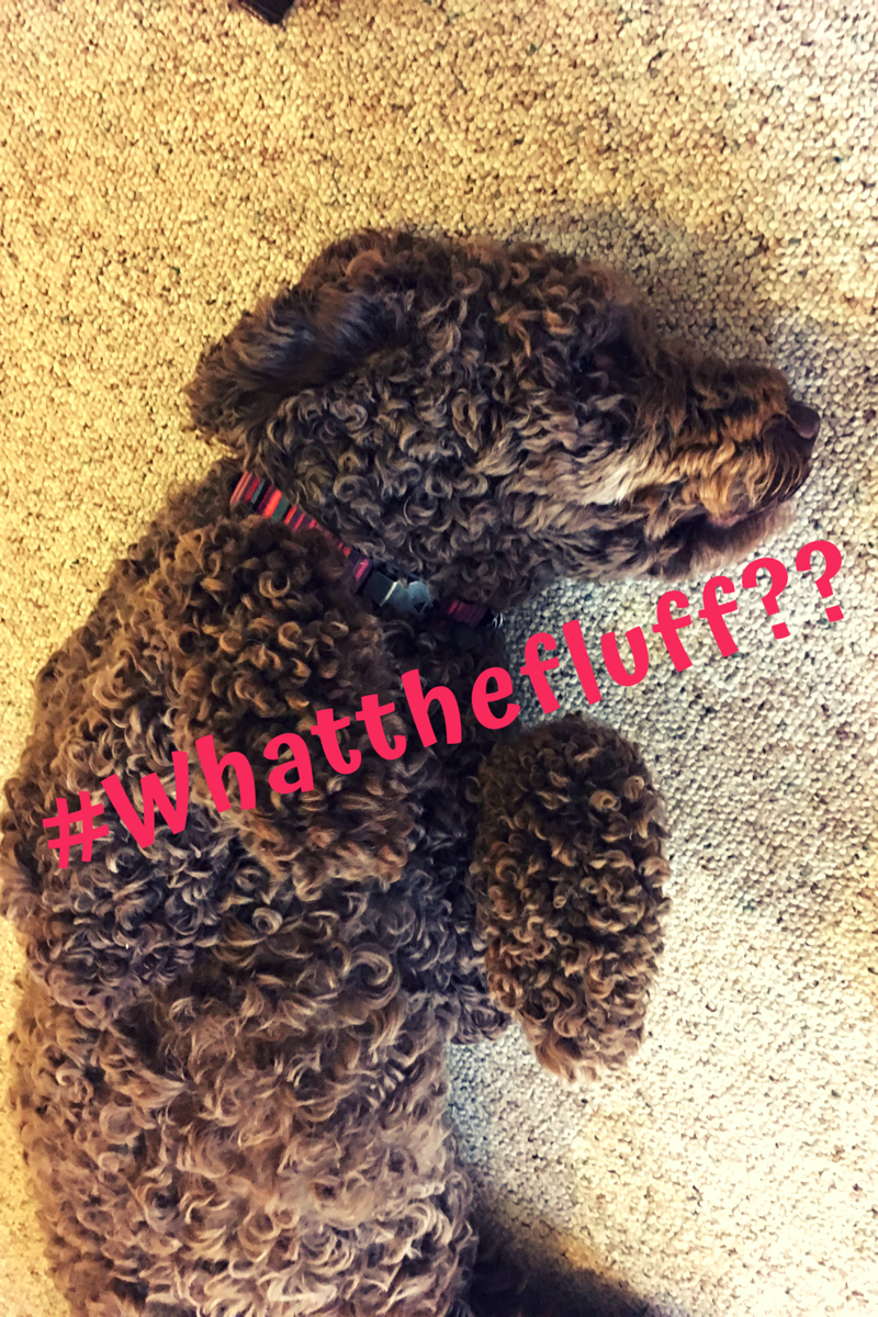 #Whatthefluff - Bark! Ellie Speaks