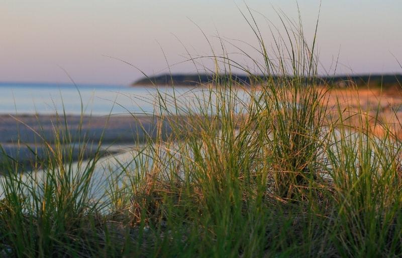 Dune at sunset