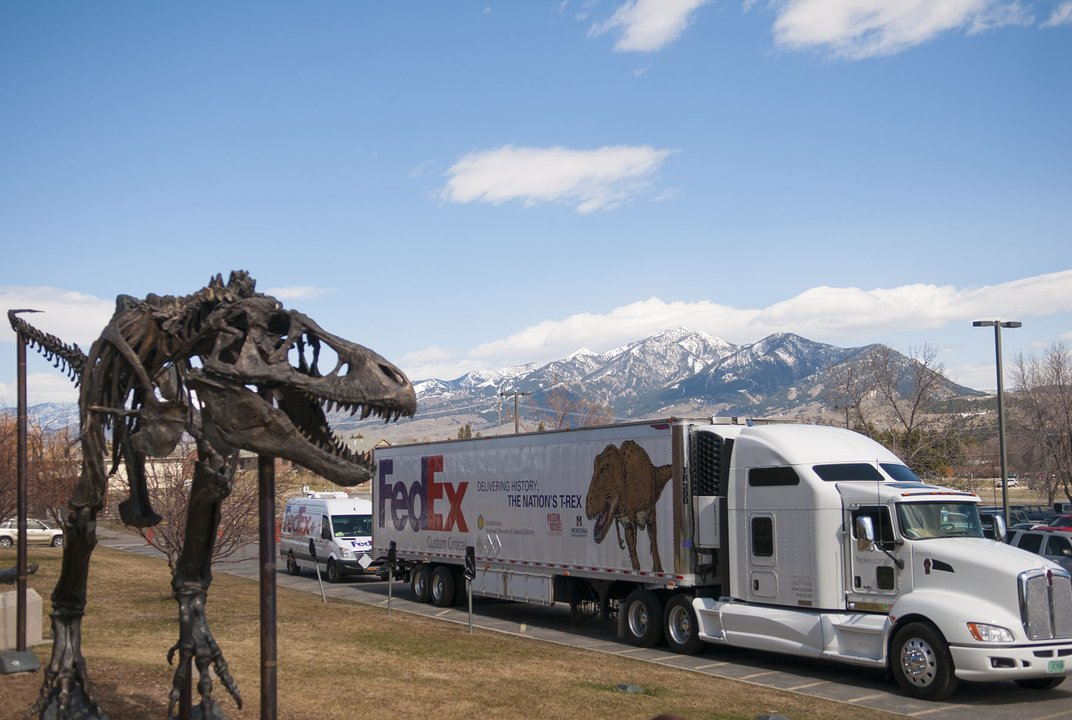 Washington Post - T. rex fossils arrive at Smithsonian's National Museum of Natural History