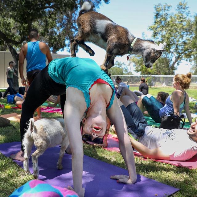 Goat Yoga - Wall Street Journal