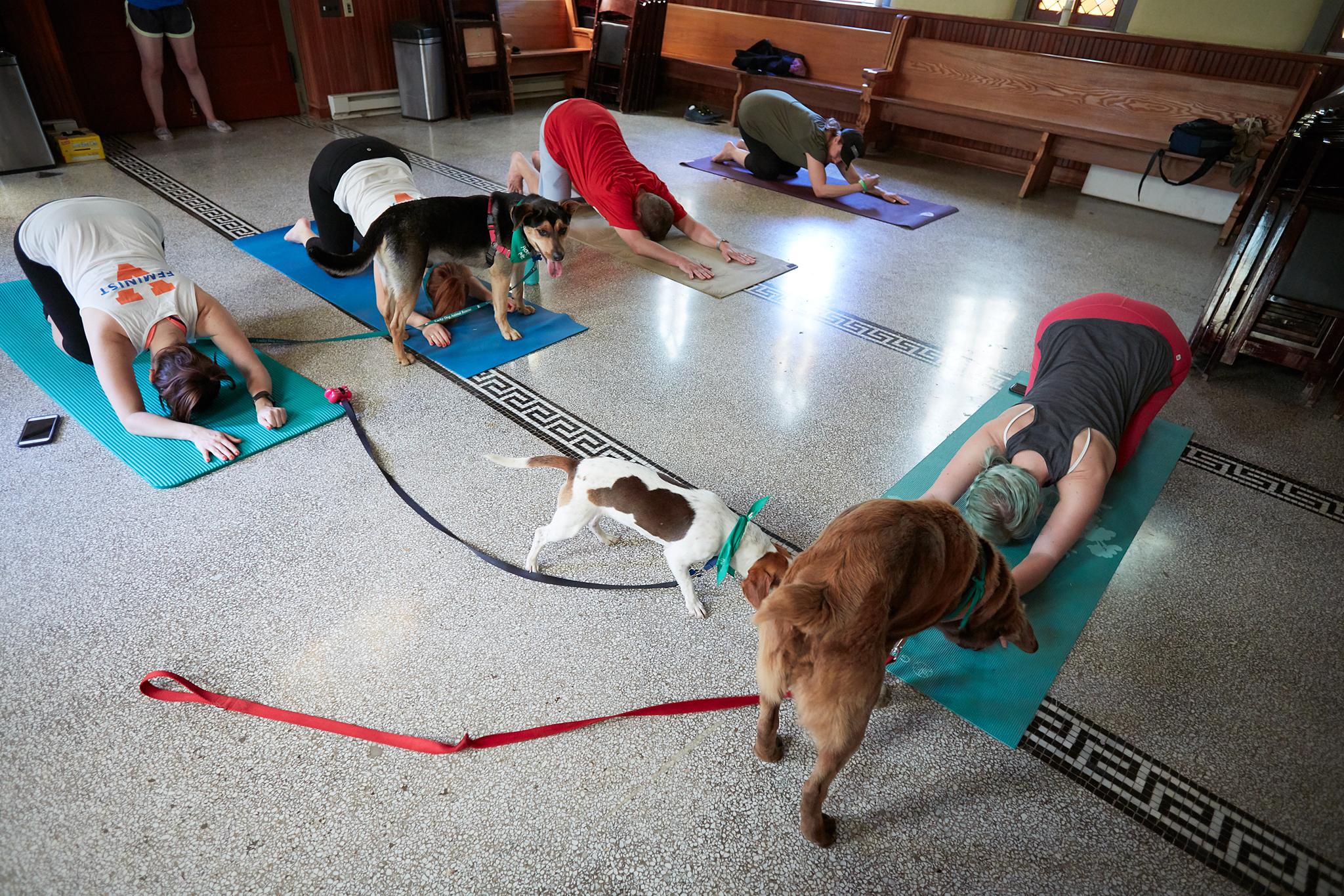 Puppy Yoga 031.jpg