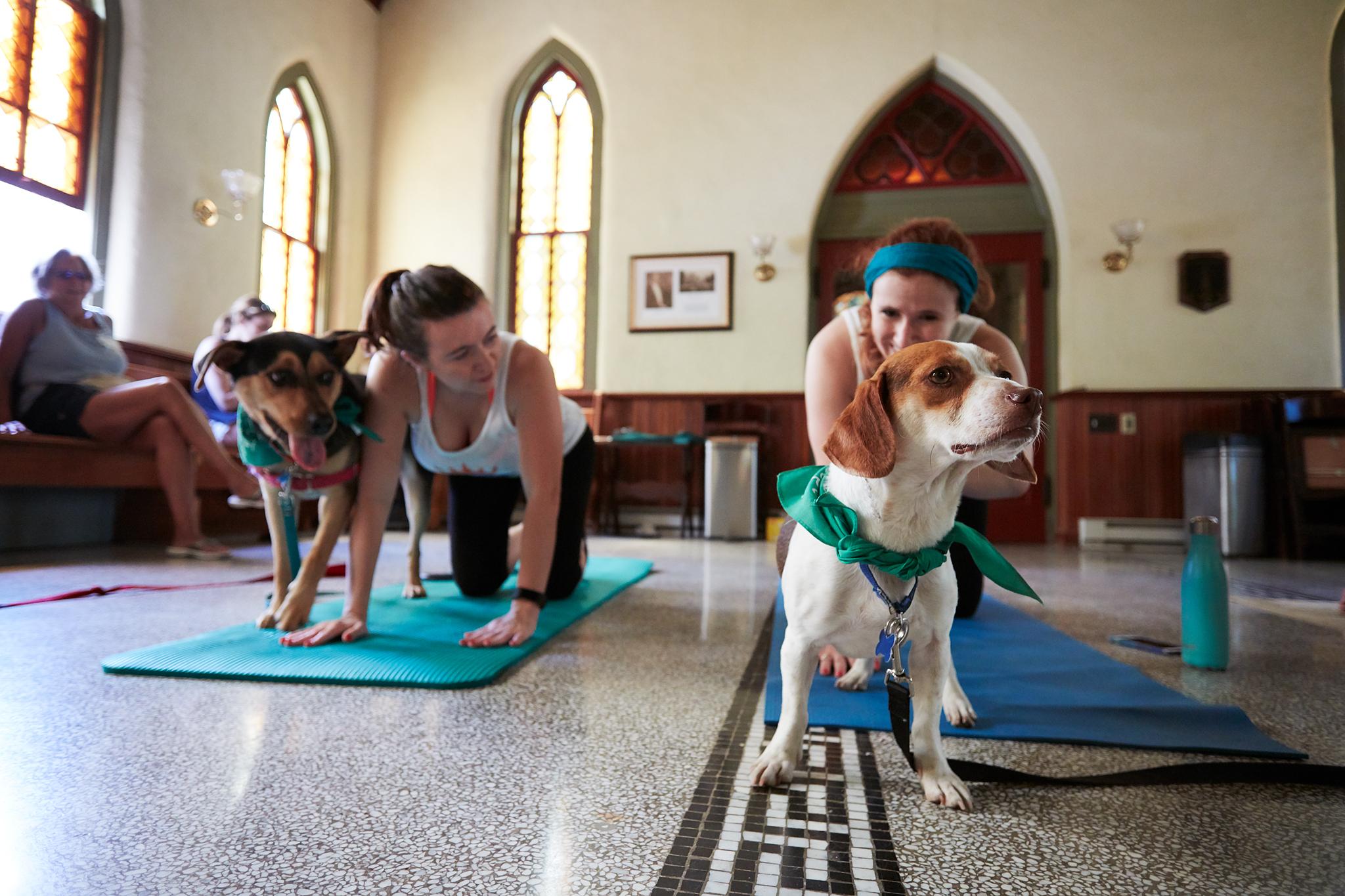 Puppy Yoga 042.jpg