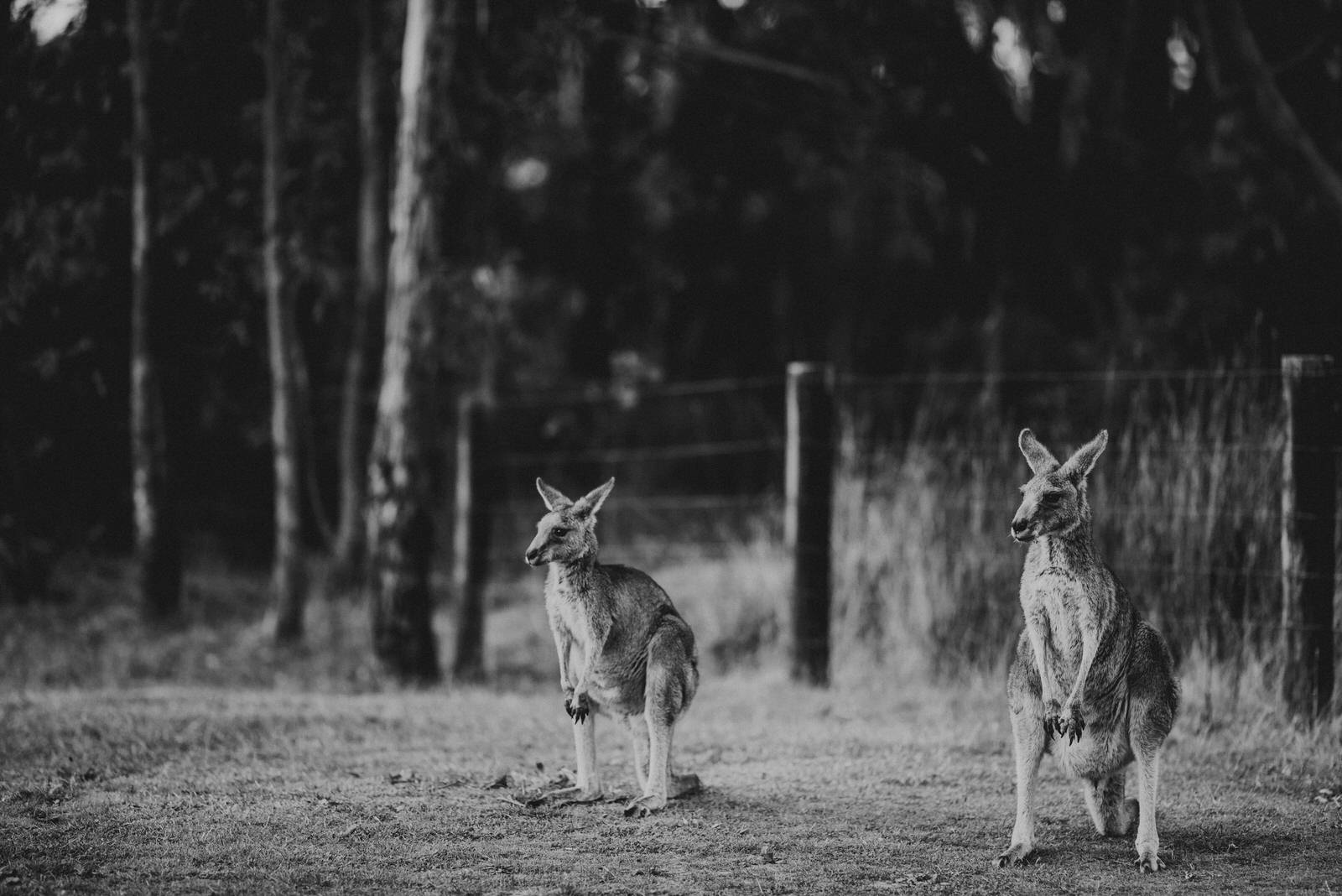 Australia Full Edits-567.jpg