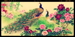 Peacock_Paintings10.jpg