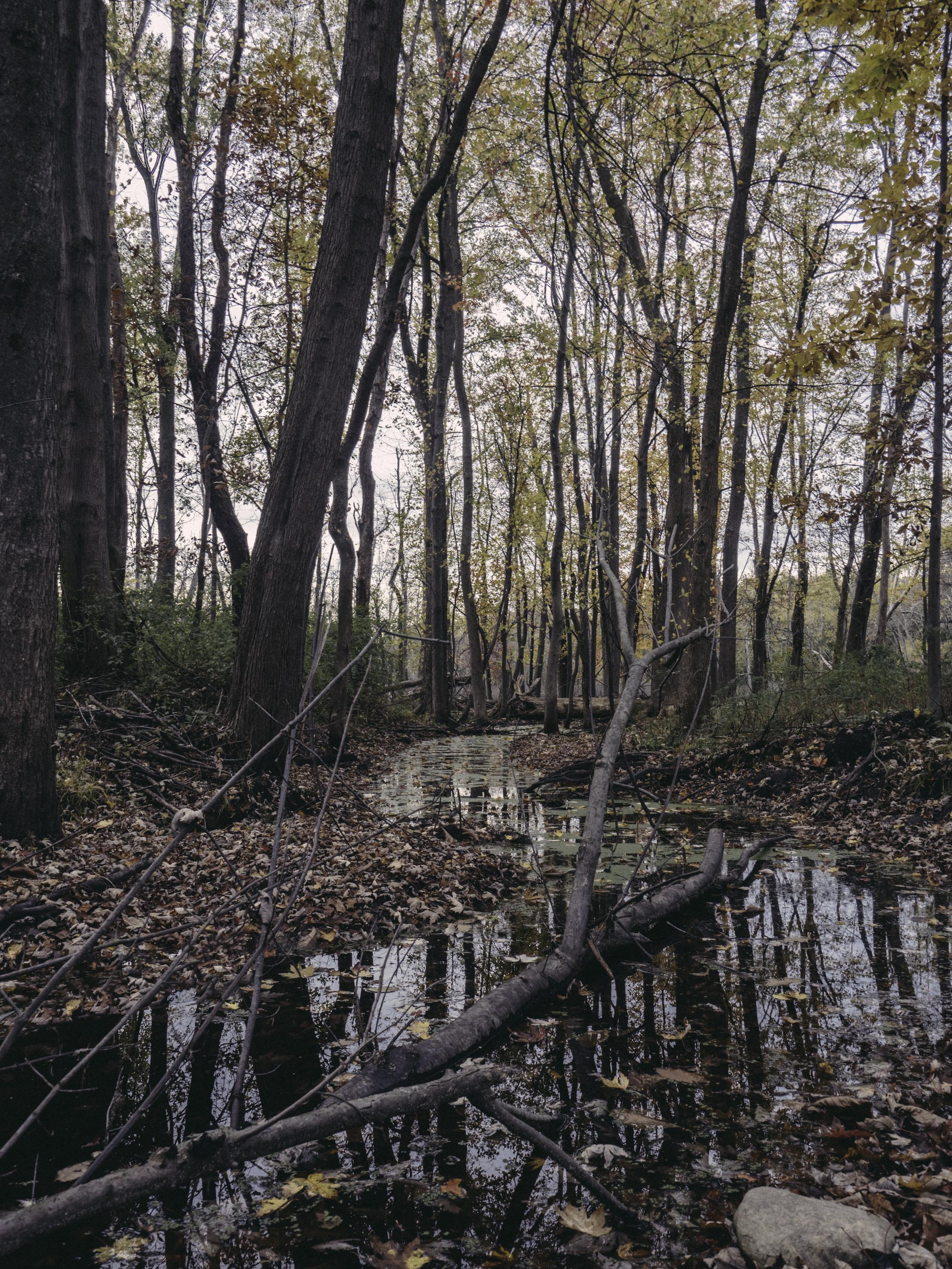 Woodland Park No Pipe.jpg