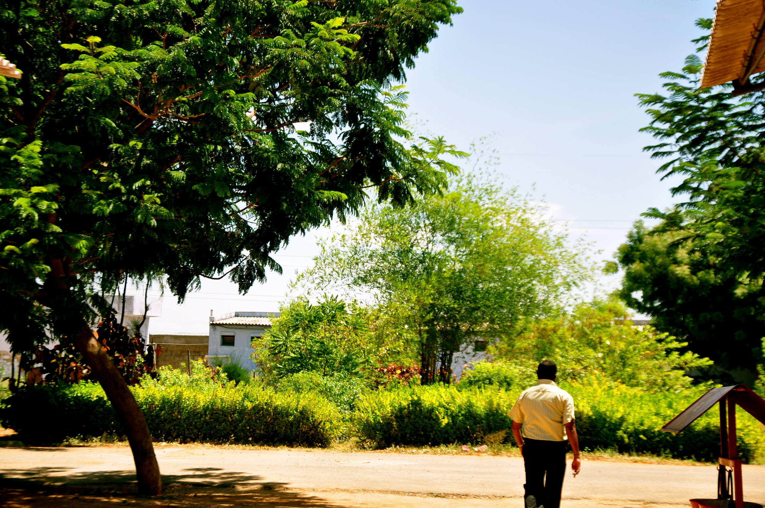 Green environment.JPG