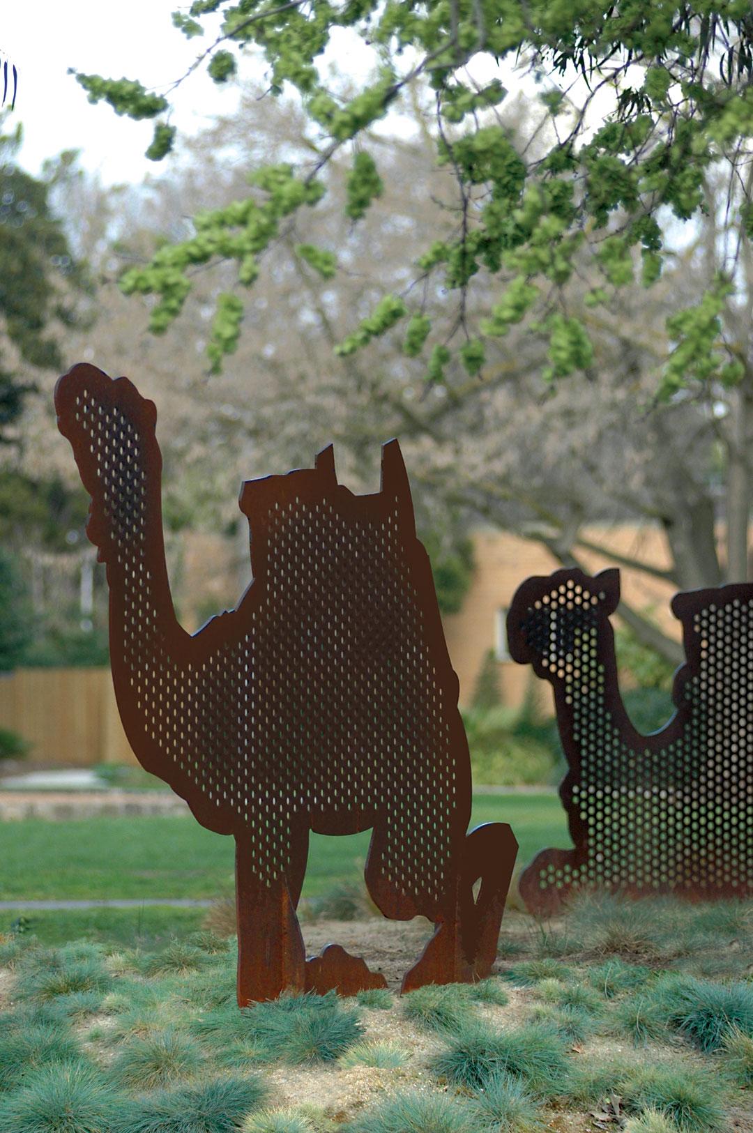 camels-3.jpg