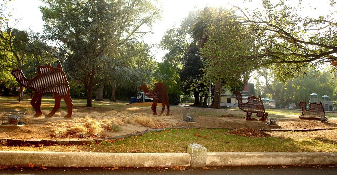 Camels NEW SHOT.jpg