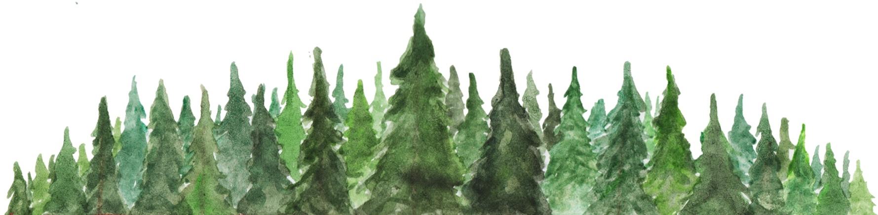 Evergreens1.jpg