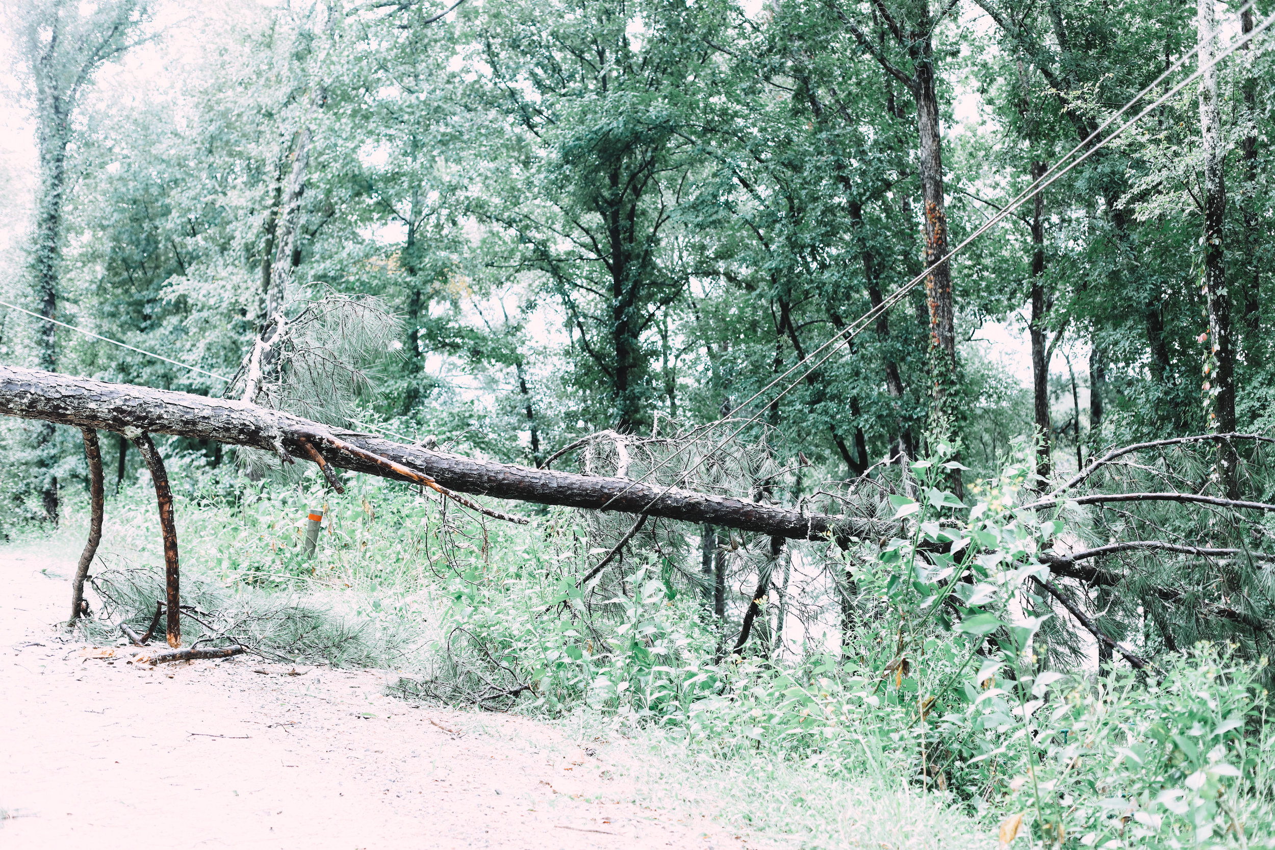 On Tuesday morning, we discovered the downed tree over the power line.