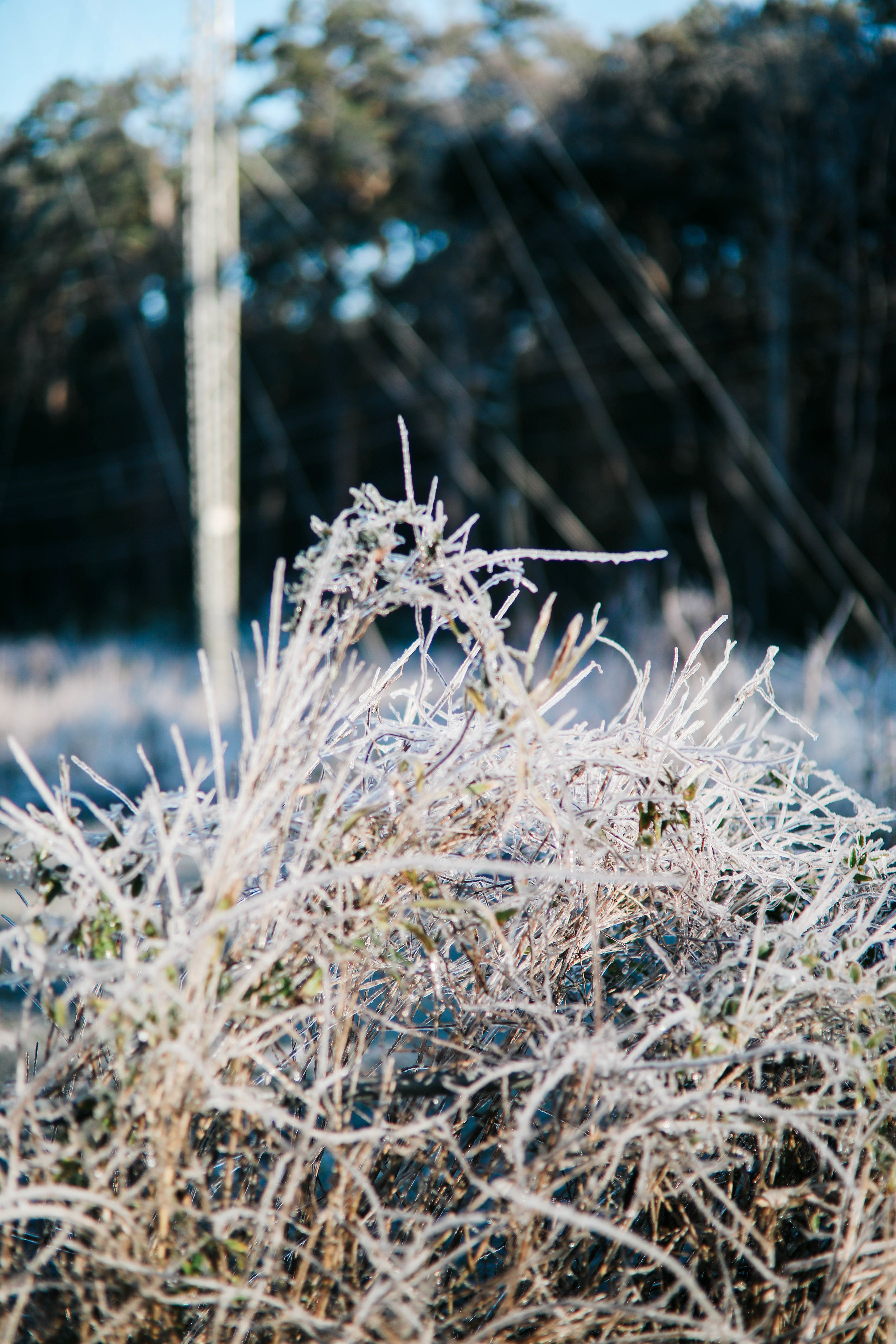 Tall grass is covered in ice on the side of the road