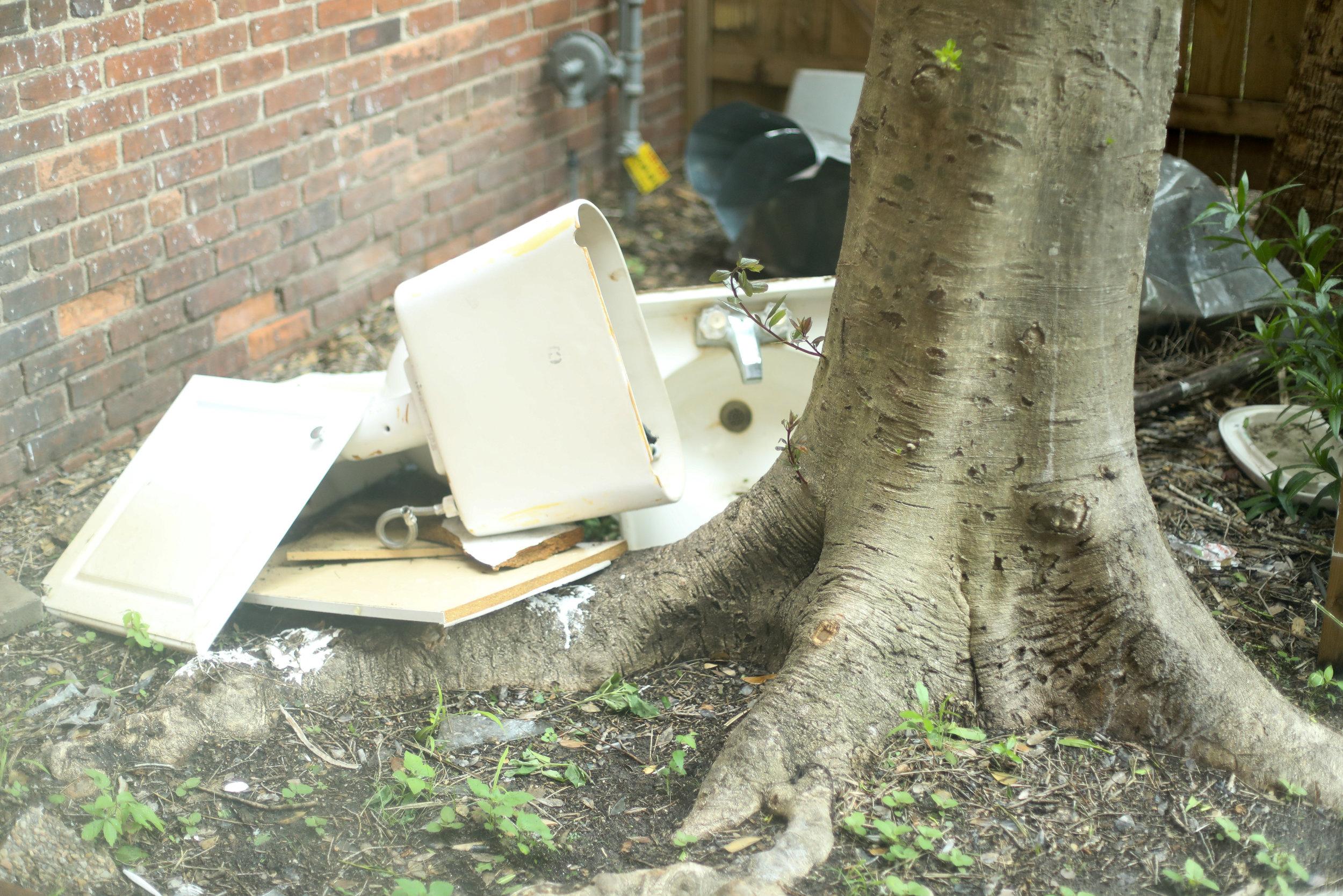 Broken toilet sits beside tree roots