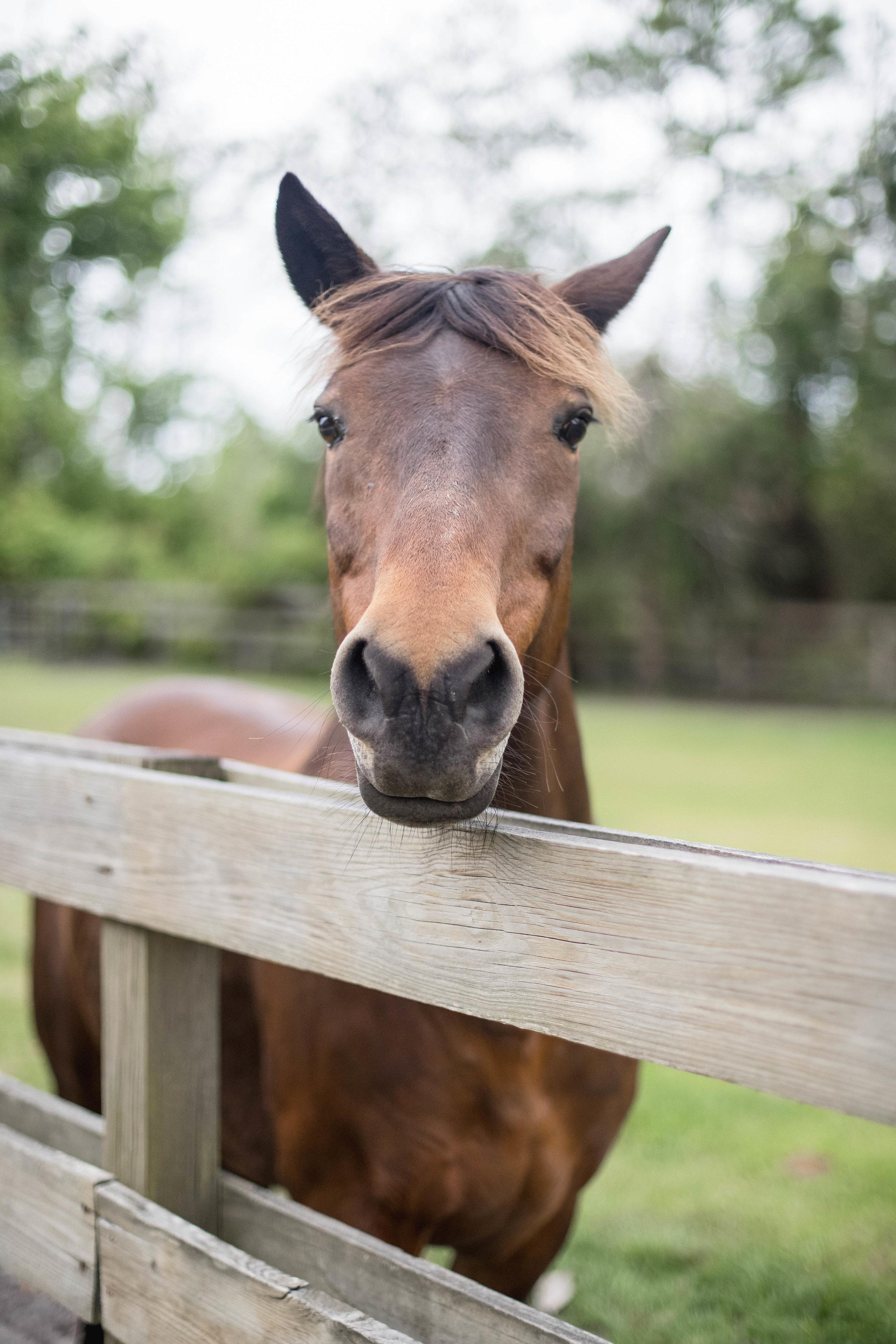 HorseStampInnElopementFila51.jpg