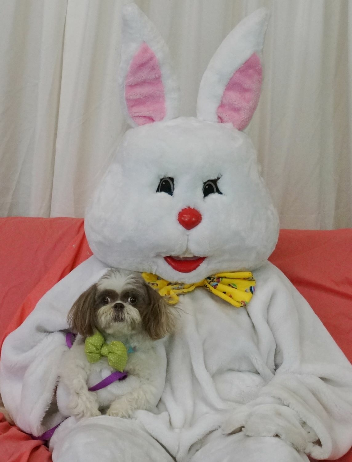 The oh so scary Easter Bunny