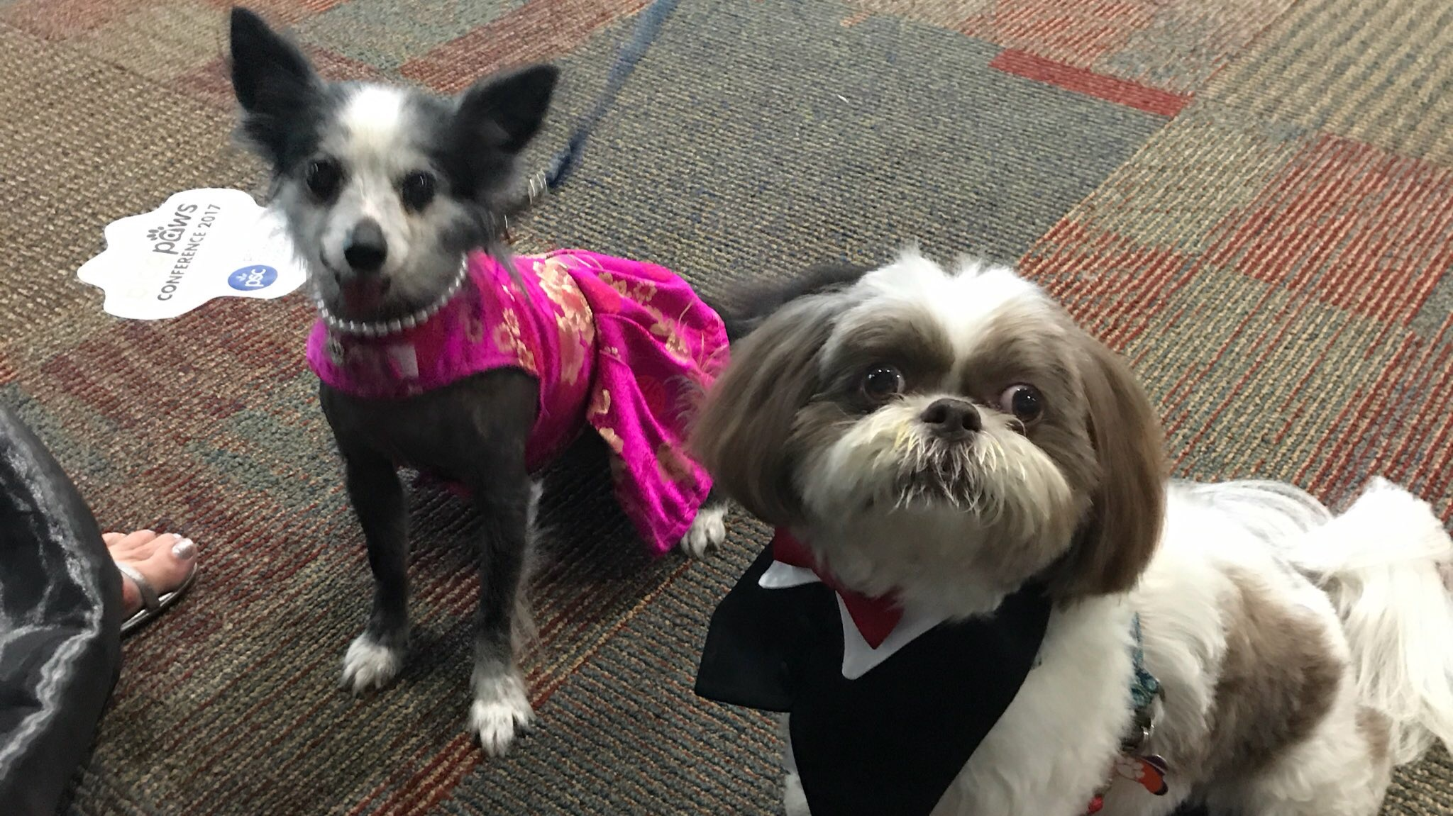 Katniss and Murphy fresh off the Red Carpet at the BlogPaws Nose to Nose Awards