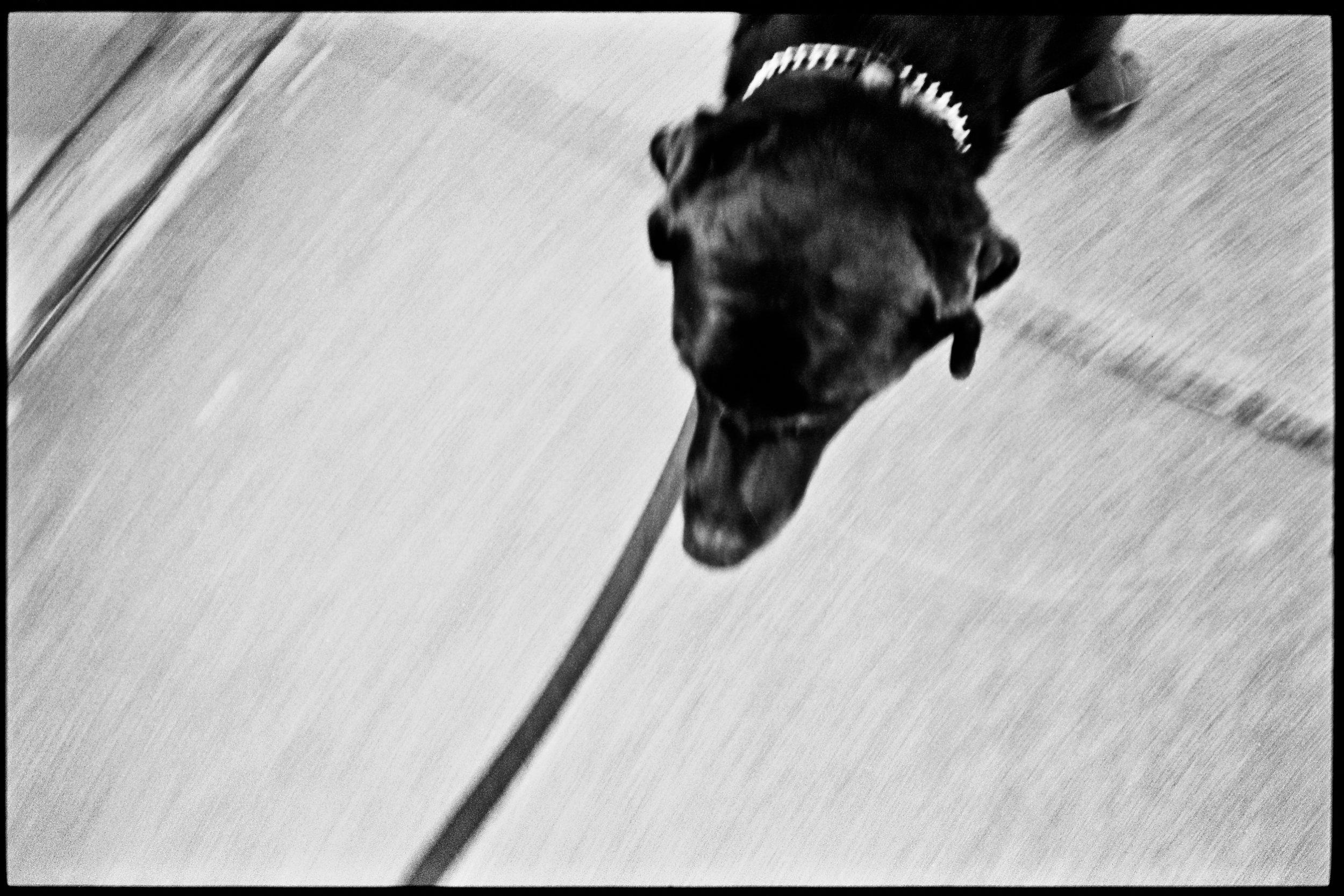 a_dogs_life-2.jpg
