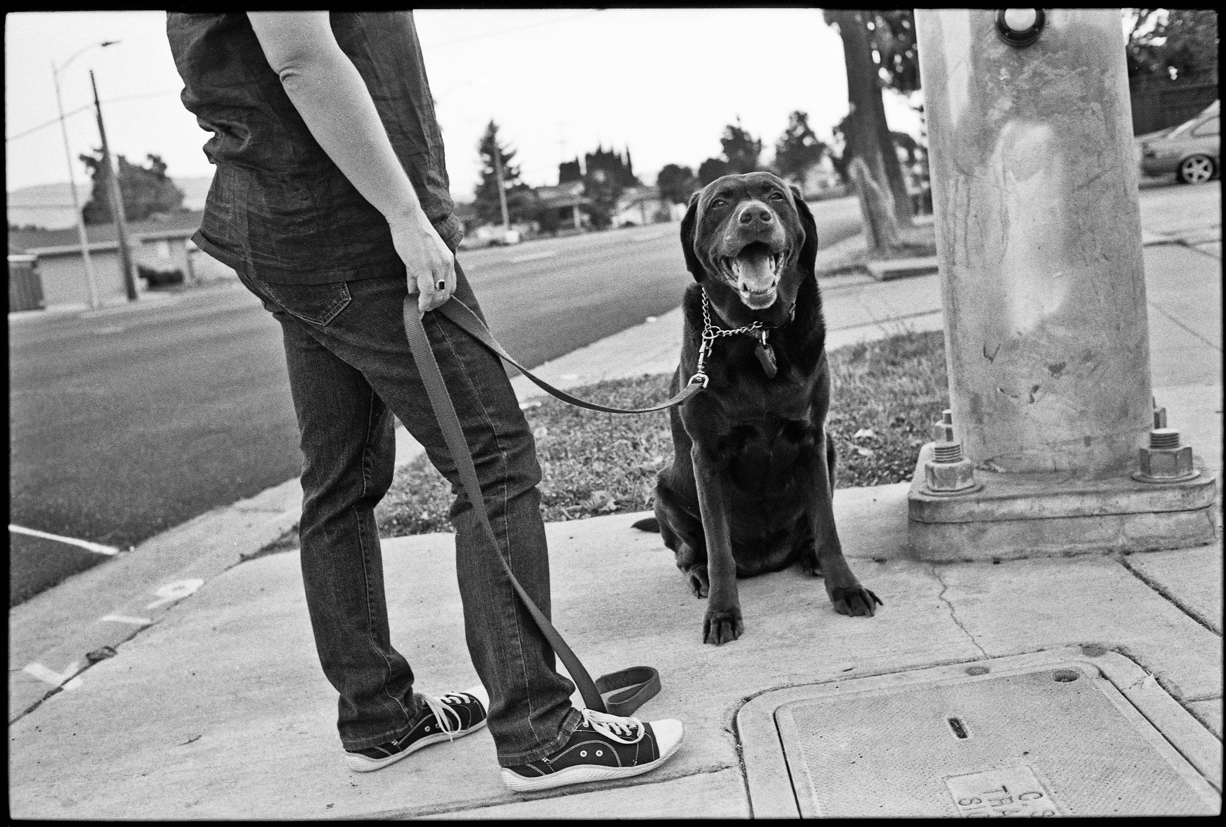 a_dogs_life-1.jpg