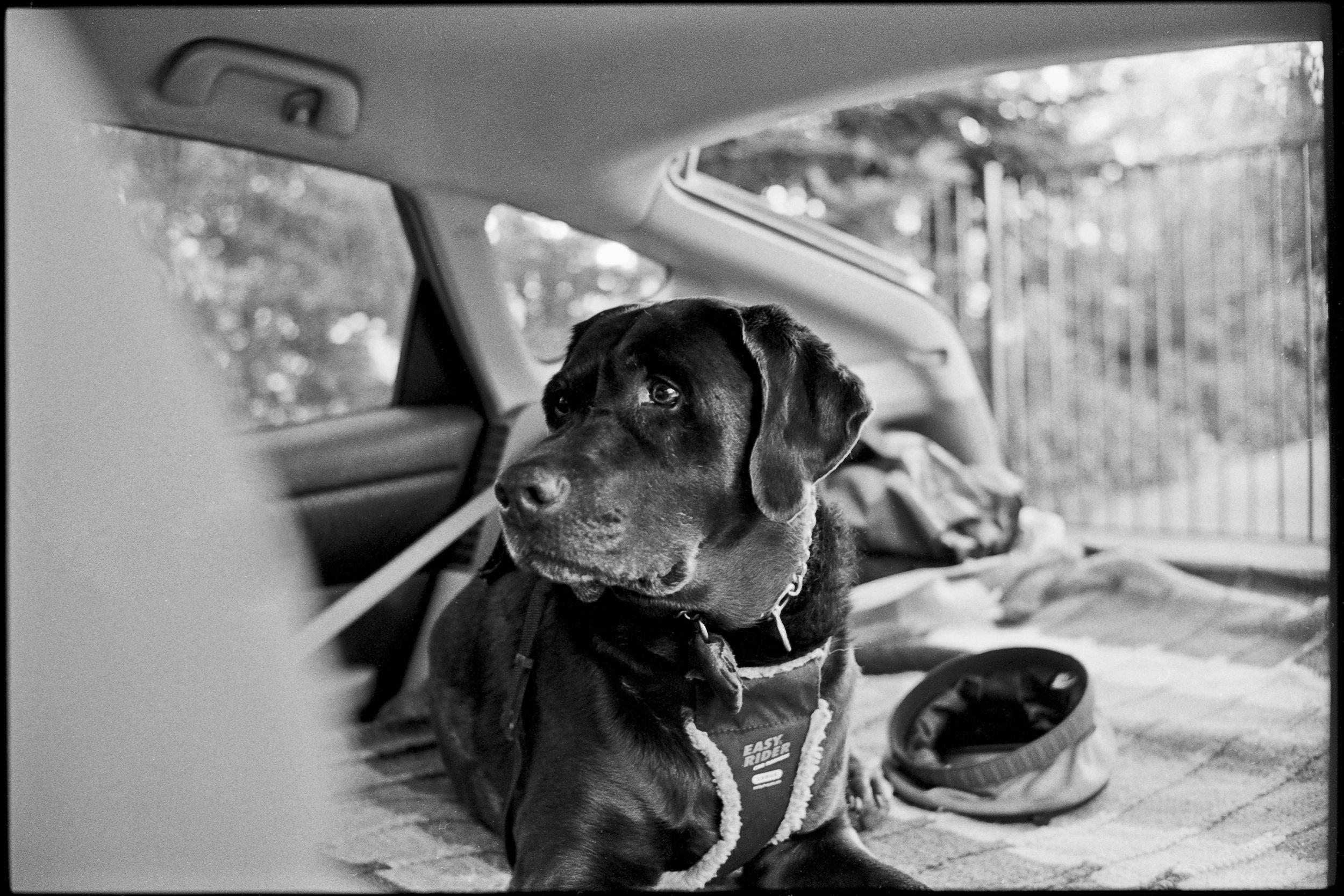 a_dogs_life-3.jpg
