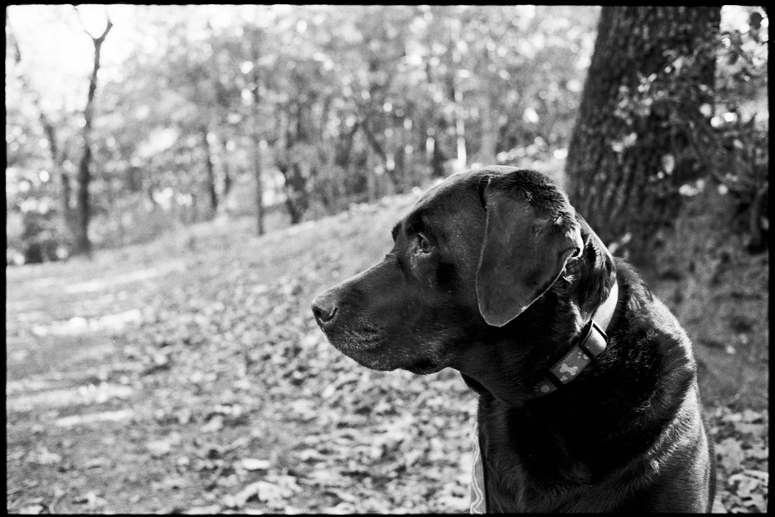 a_dogs_life-4.jpg