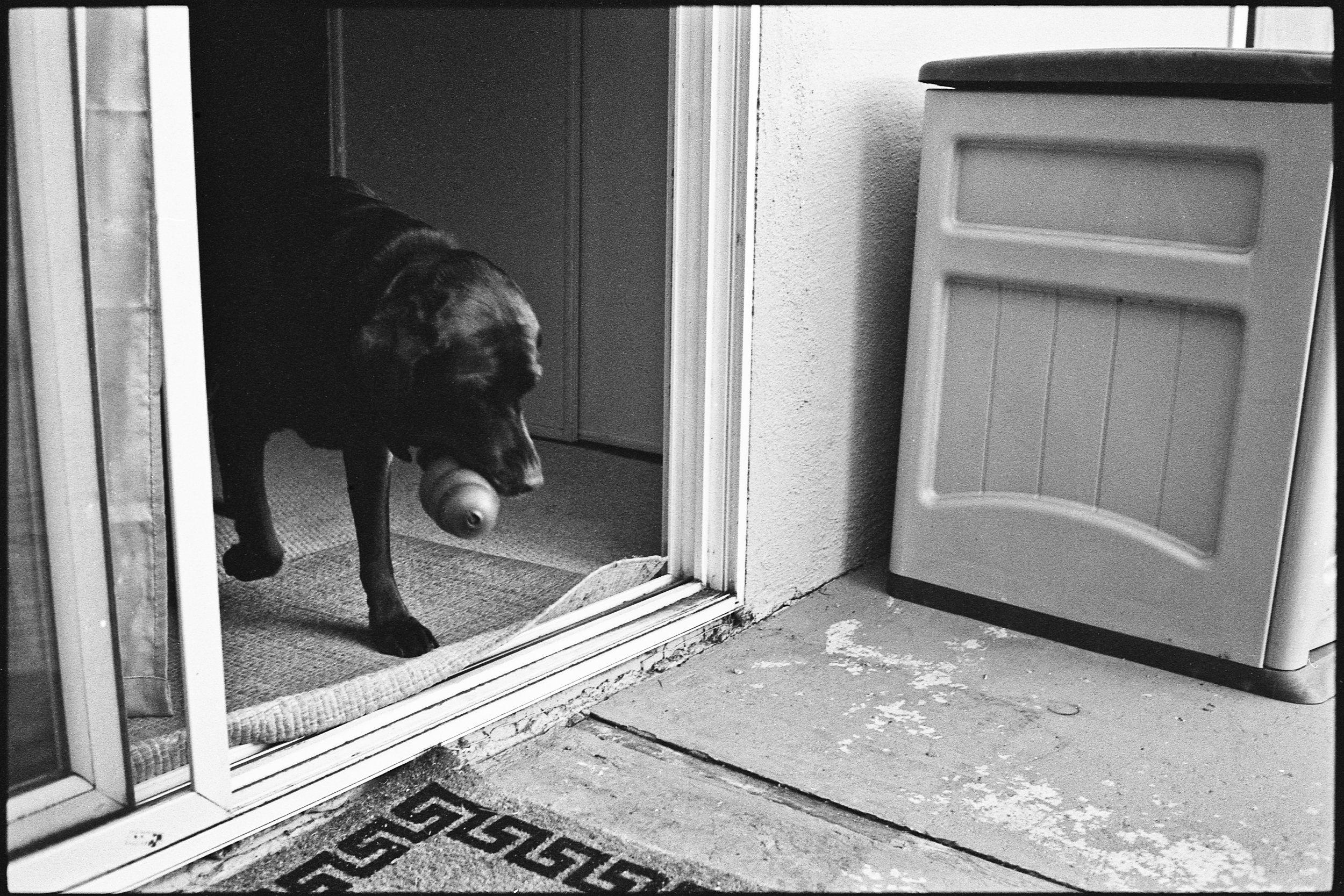 a_dogs_life-6.jpg