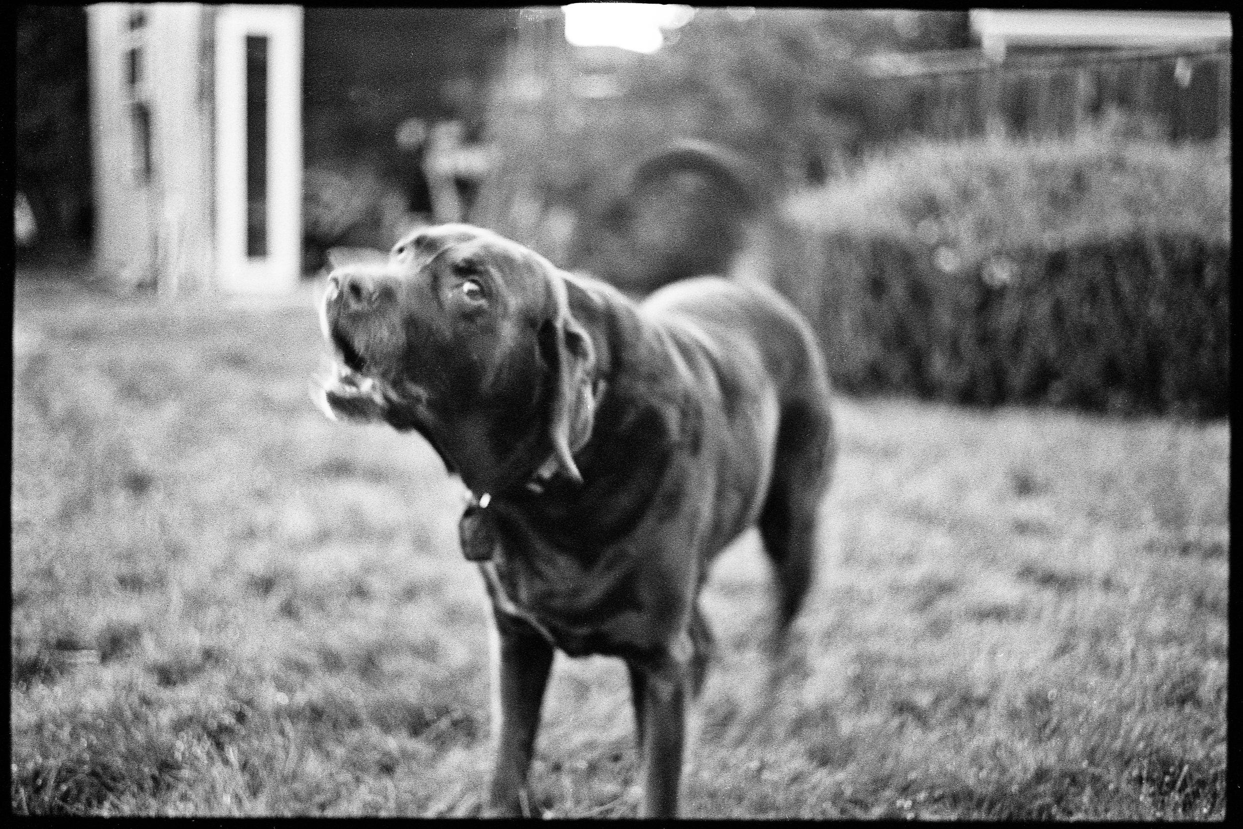 a_dogs_life-7.jpg