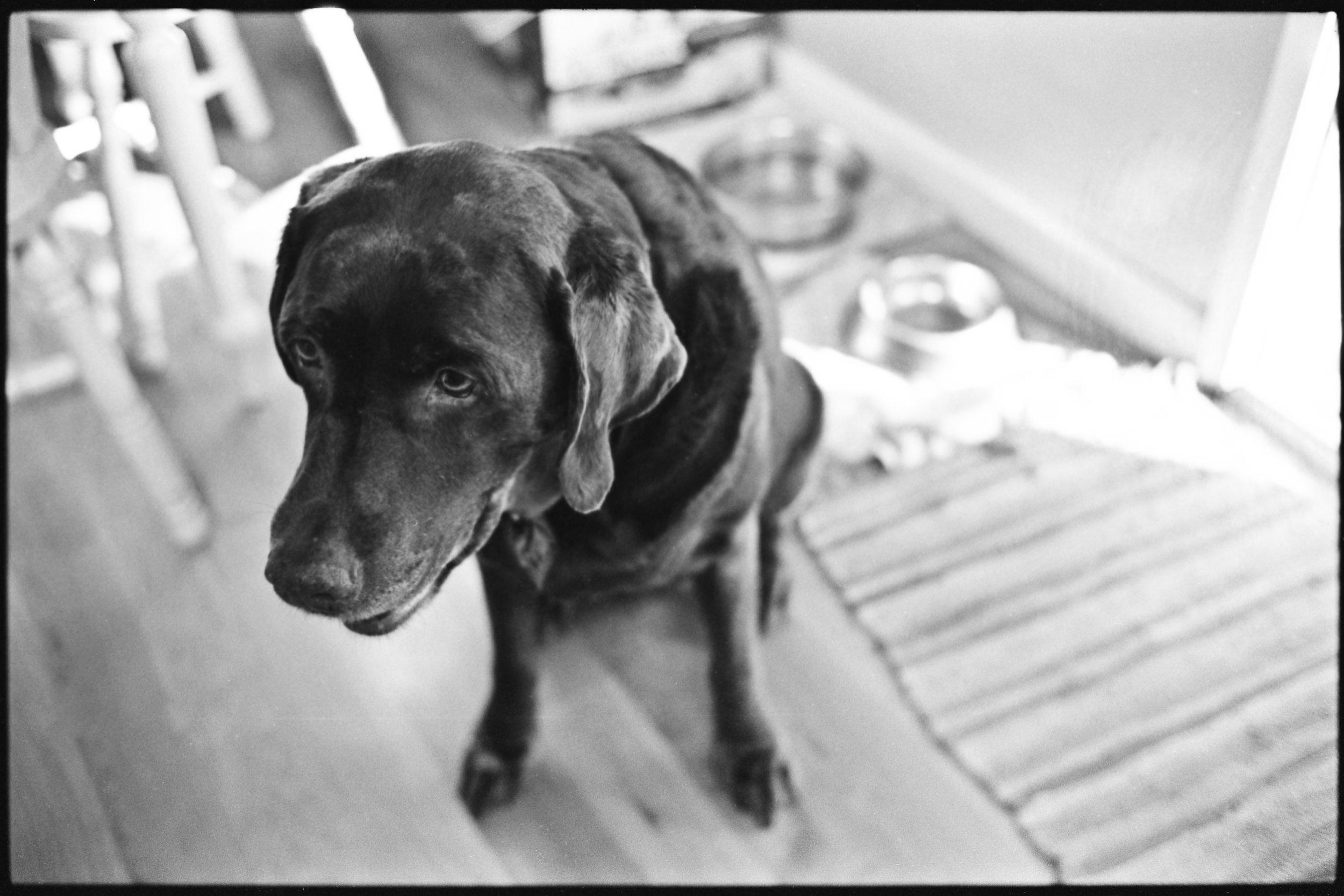 a_dogs_life-9.jpg