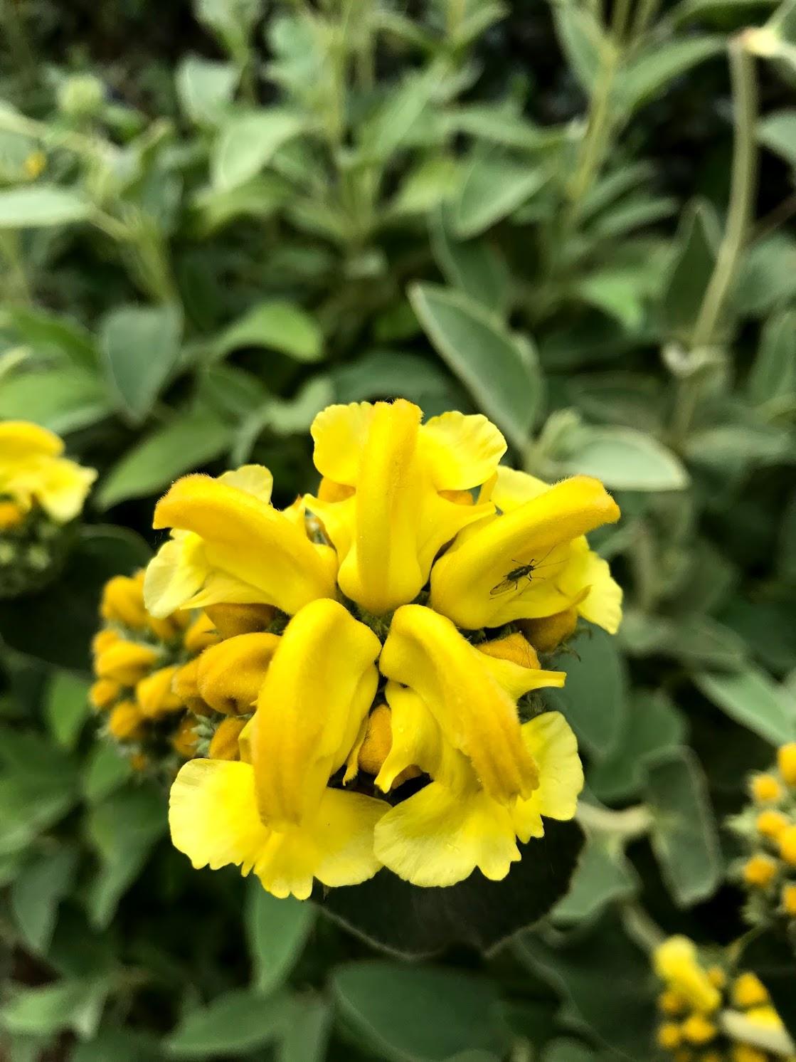 flowers of london 2.jpg