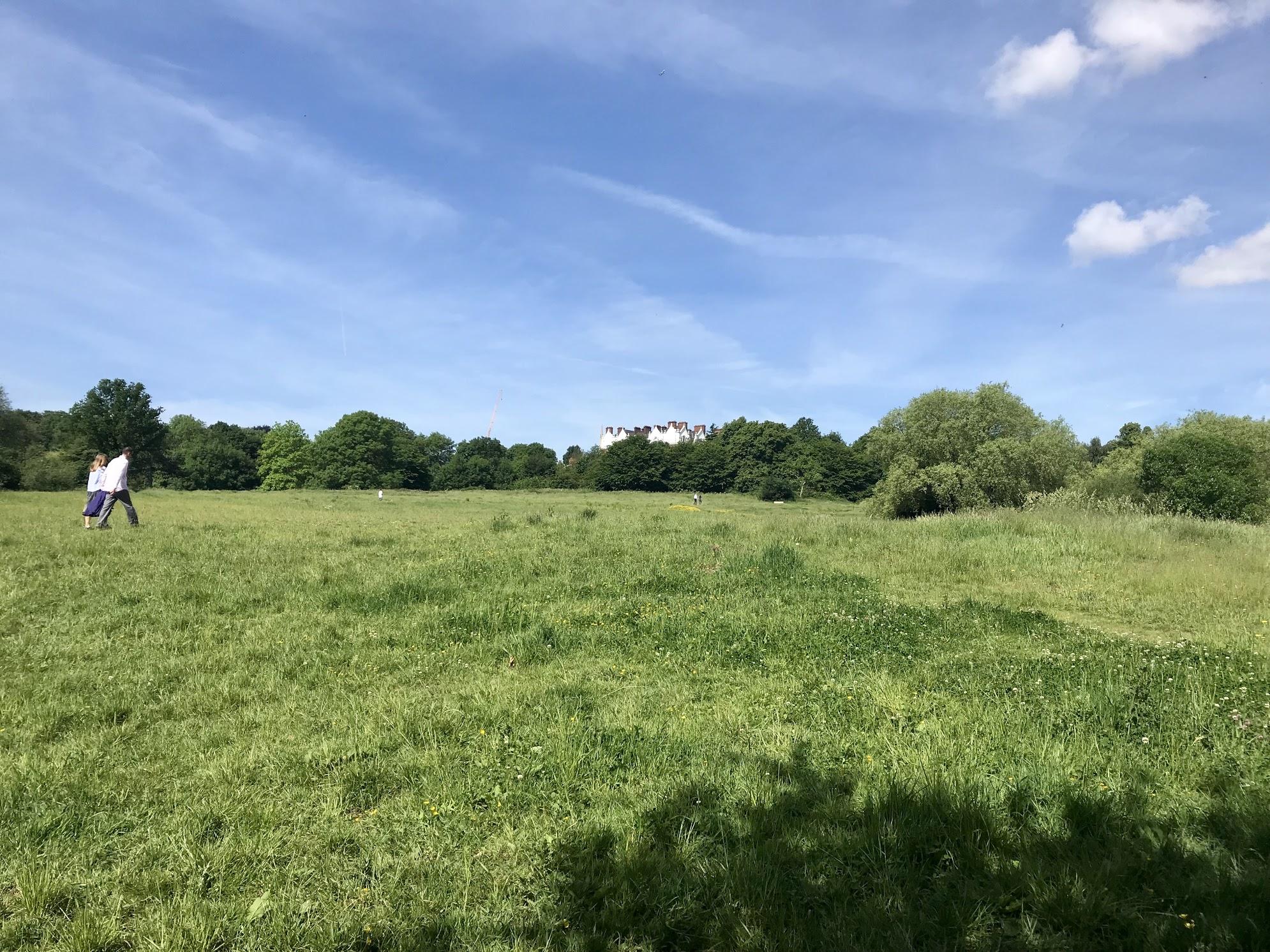 field in hampstead heath.jpg