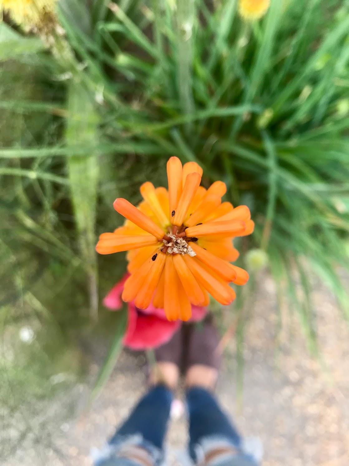 hyde park orange flower.jpg