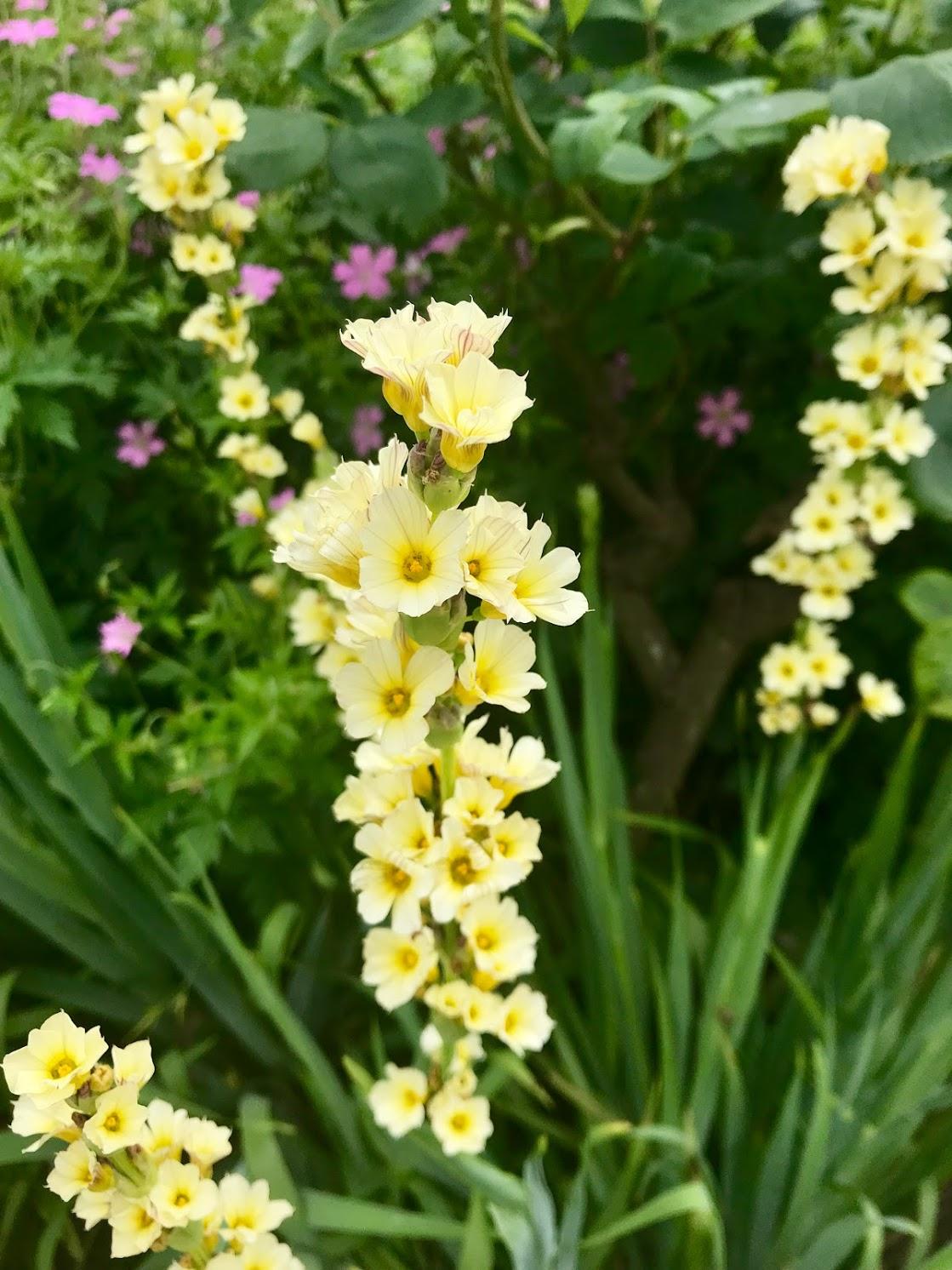 hyde park yellow flowers.jpg