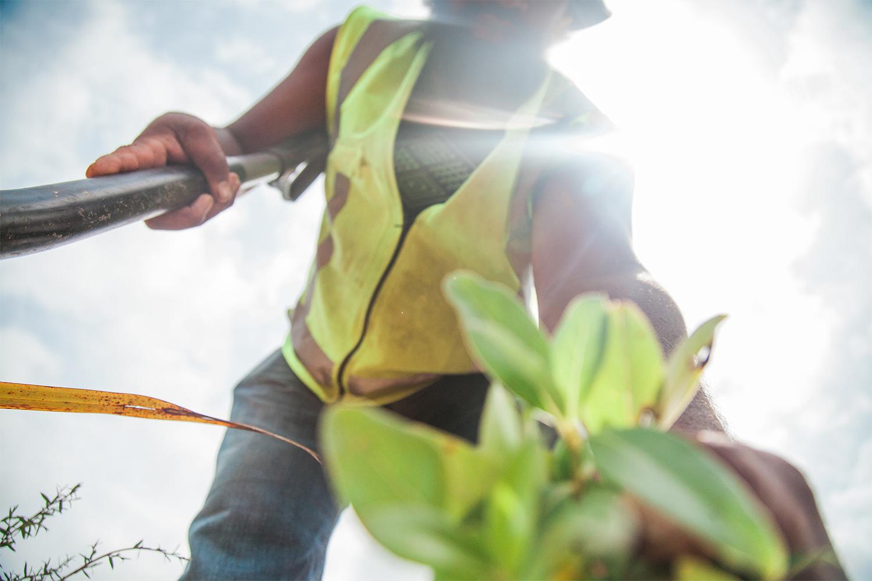 Organise a planting event - Organise a whānau or team building planting event through us!