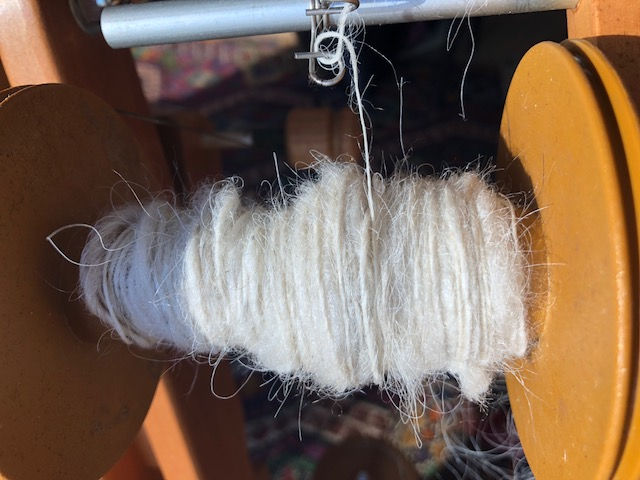 Icelandic fleece from our new ewe, Wildrose. Gorgeous and soft and extra long staple!