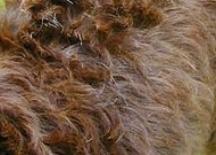 item_coattypes_dog_photo_hair.jpg