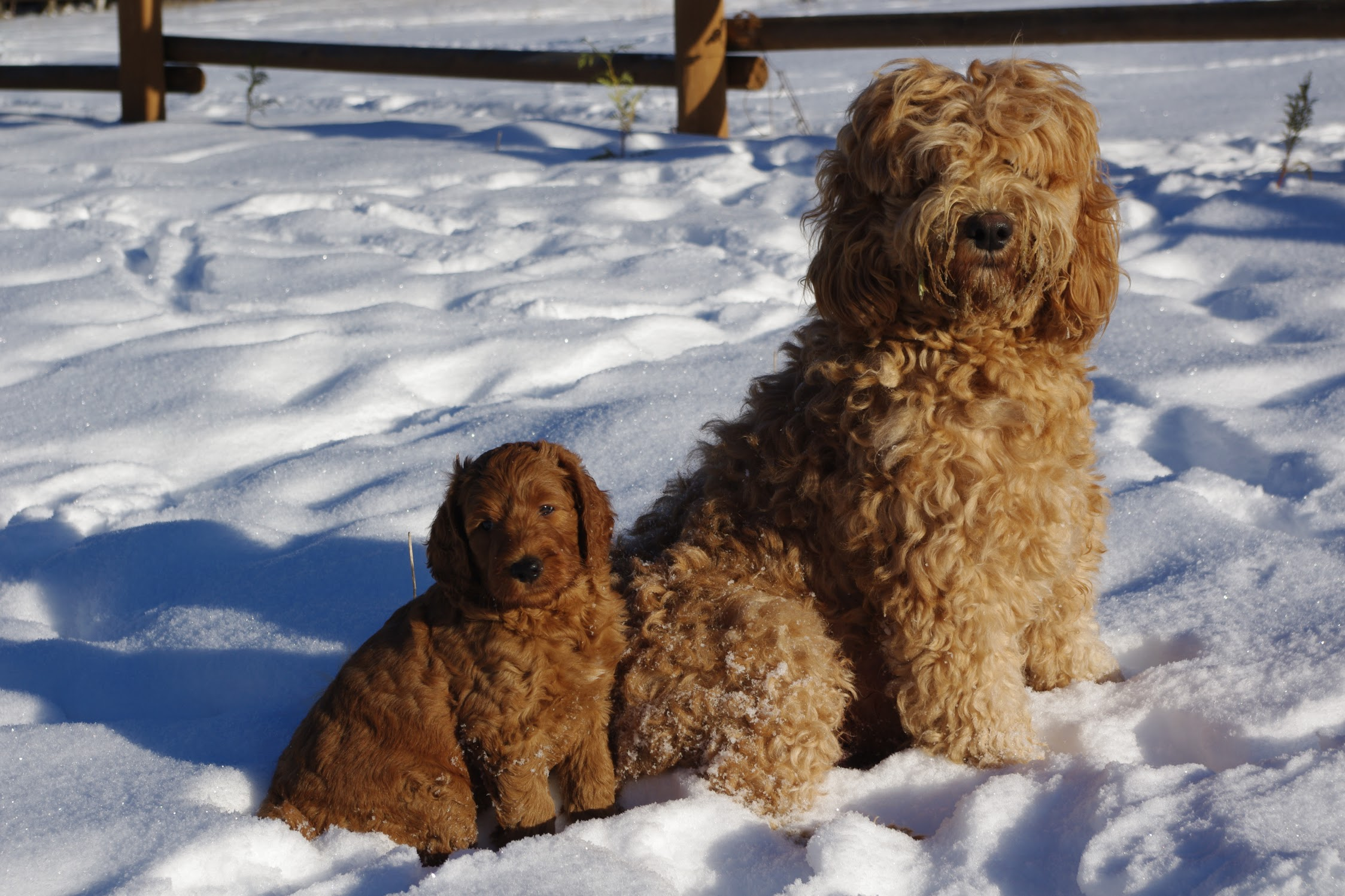 another iconic picture Astraea and one of her puppies in the snow.JPG
