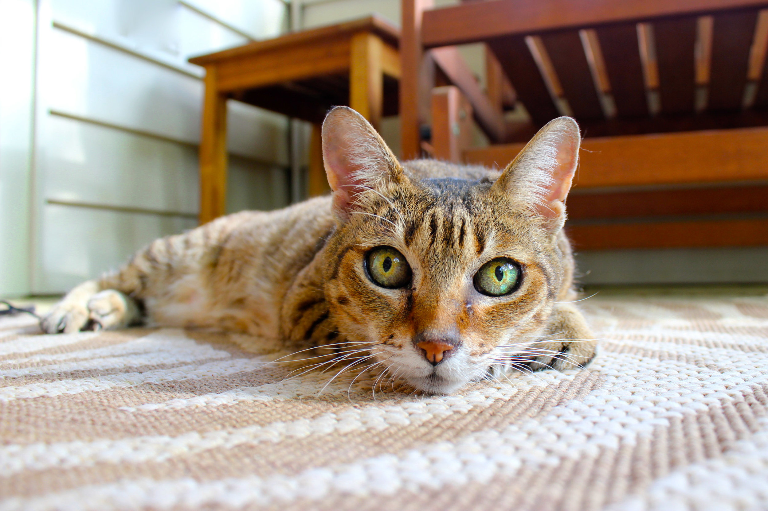 Many cats HATE traveling in the car and do much better if their veterinarian can come to them