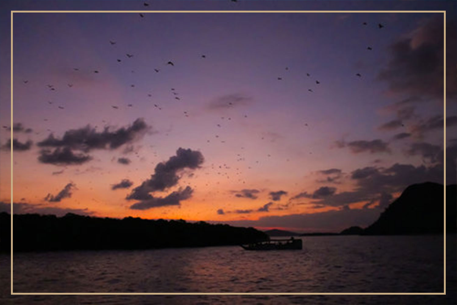 Horsehoe Bay- Bat-watching-Experience